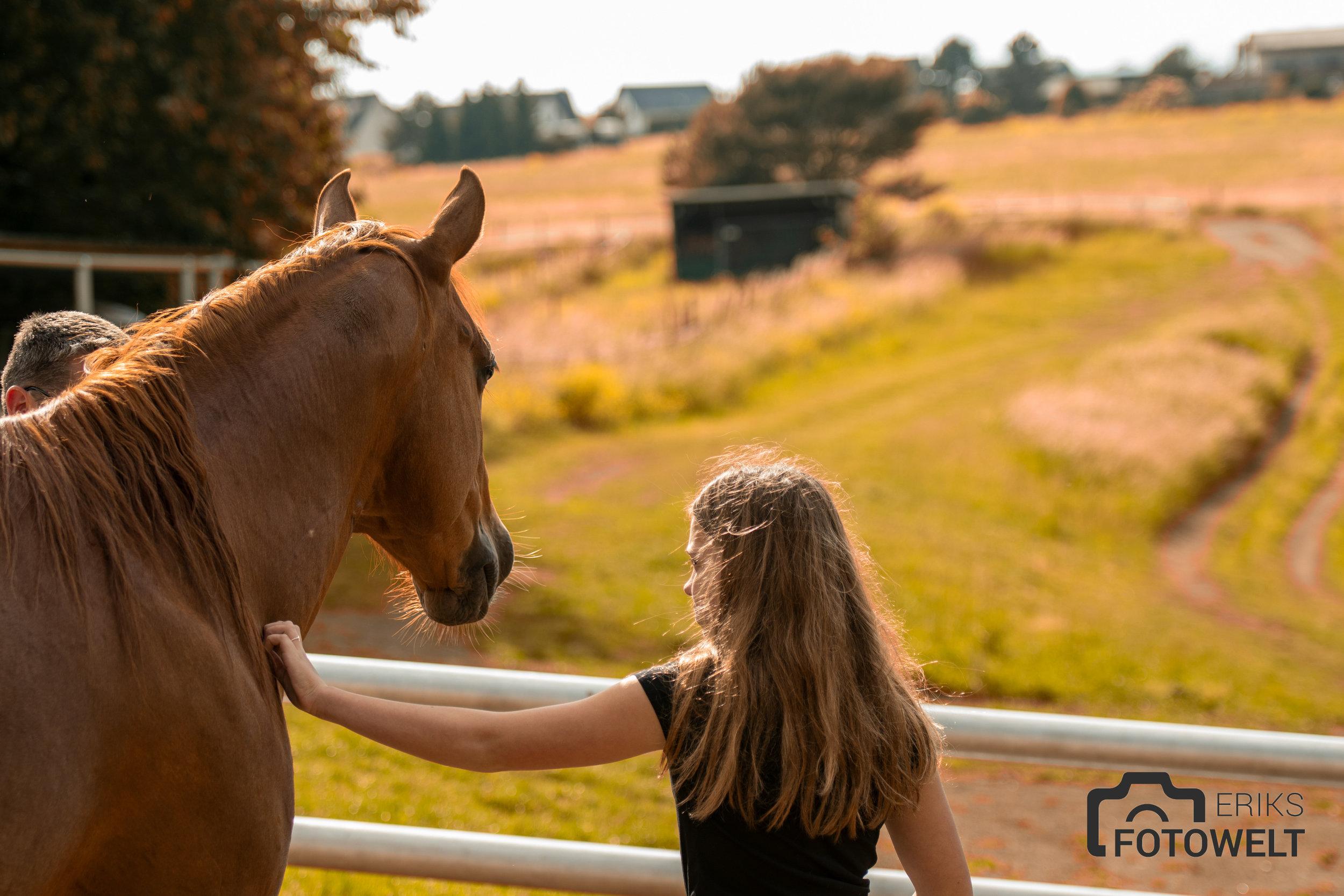 Das wunderschöne Titelbild der Webseite Horseride