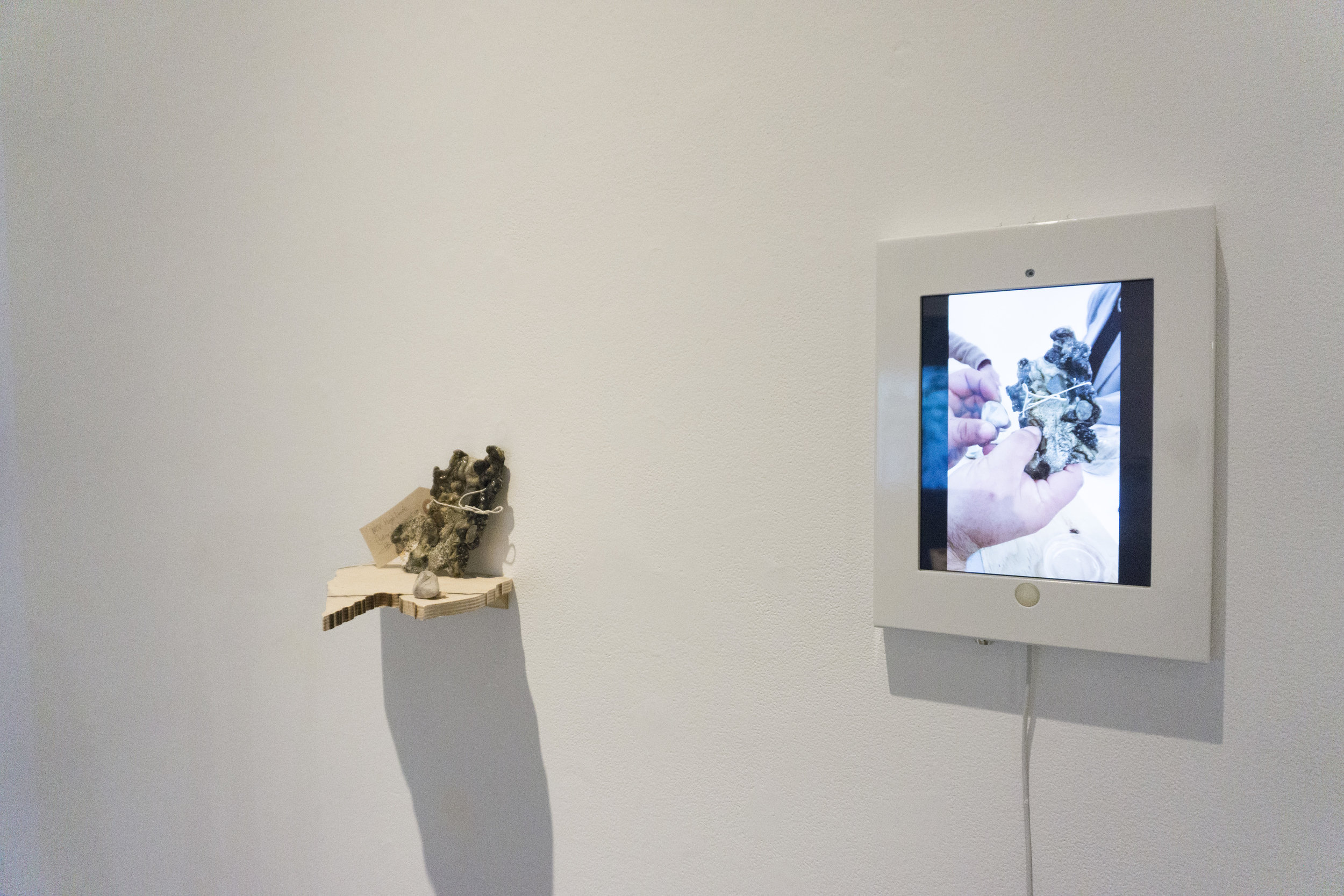 works by Noémie Fortin, Ira Kazi, Michelle Johnson, Lana Tran