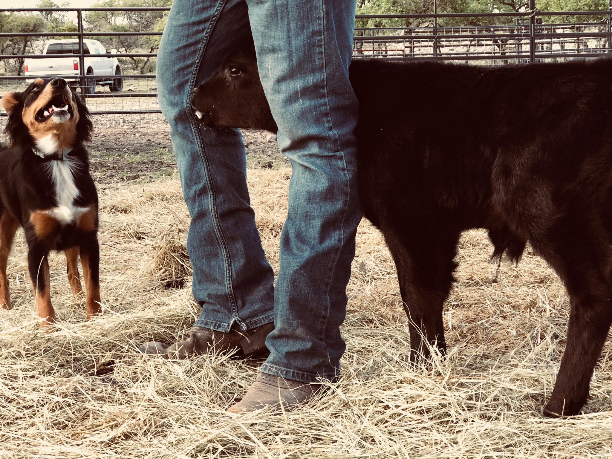 Take Action - Ready to take the next step? You can become a ranch conservationist through efficient grazing with American Aberdeen cattle yourself.