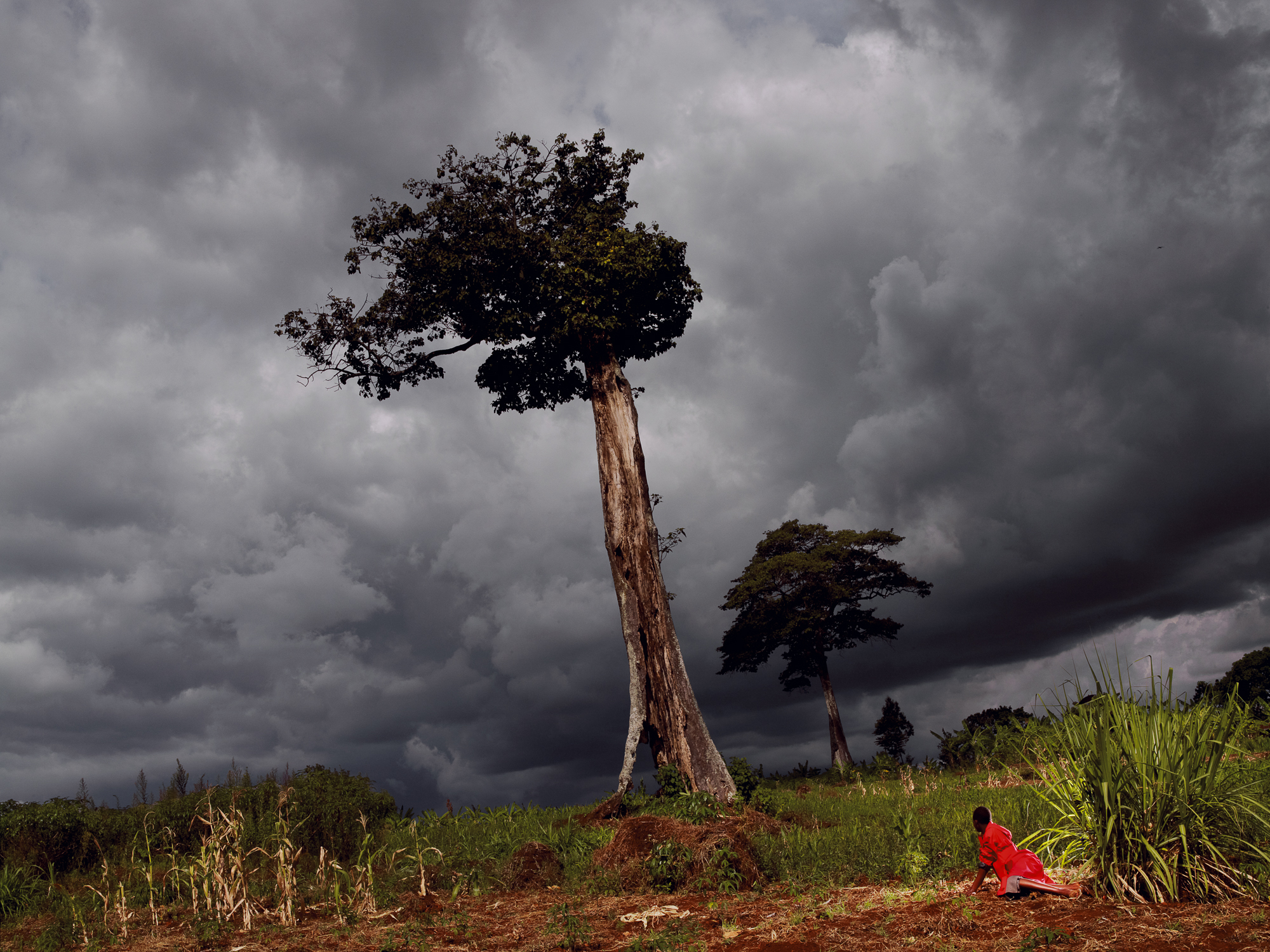 L'ARBRE FOUDROYÉ, RWANDA