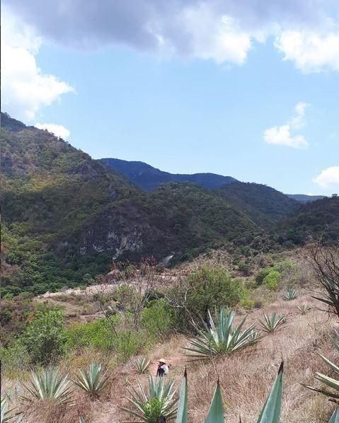 Future Mezcalero sitting amonst Sierra Negras