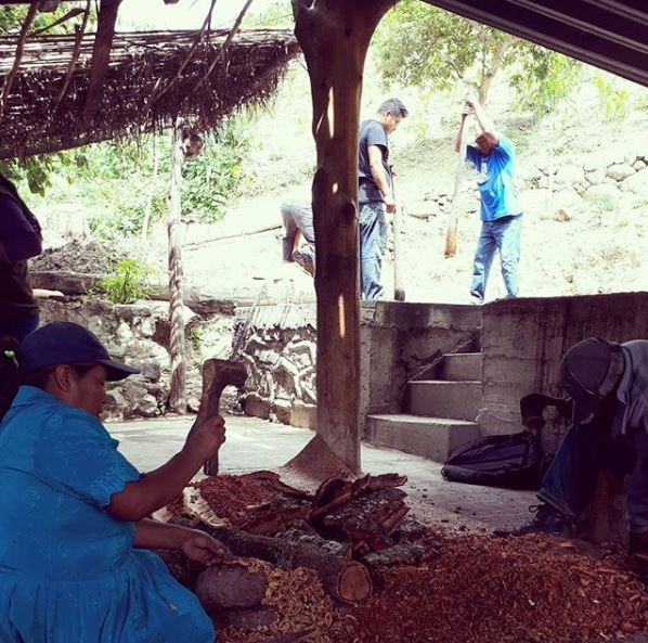 A family affair- Alberto and his Son-in-Law mash while his wife Yolanda removes the Tepehuaje bark from a branch