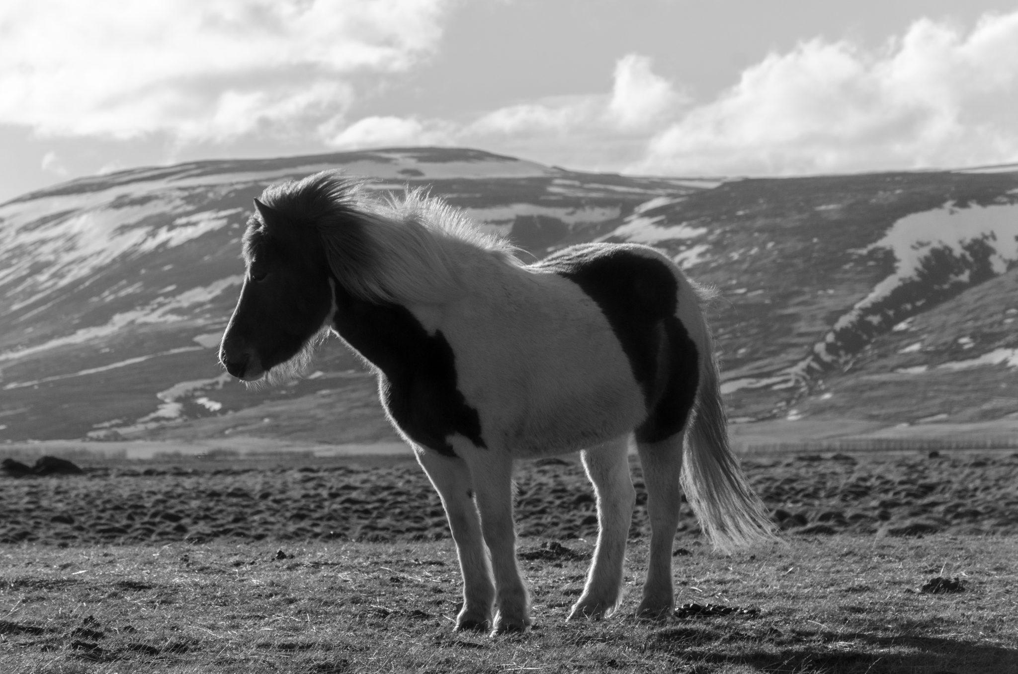 Iceland-March-04-2018-12-51-13-Edit.jpg