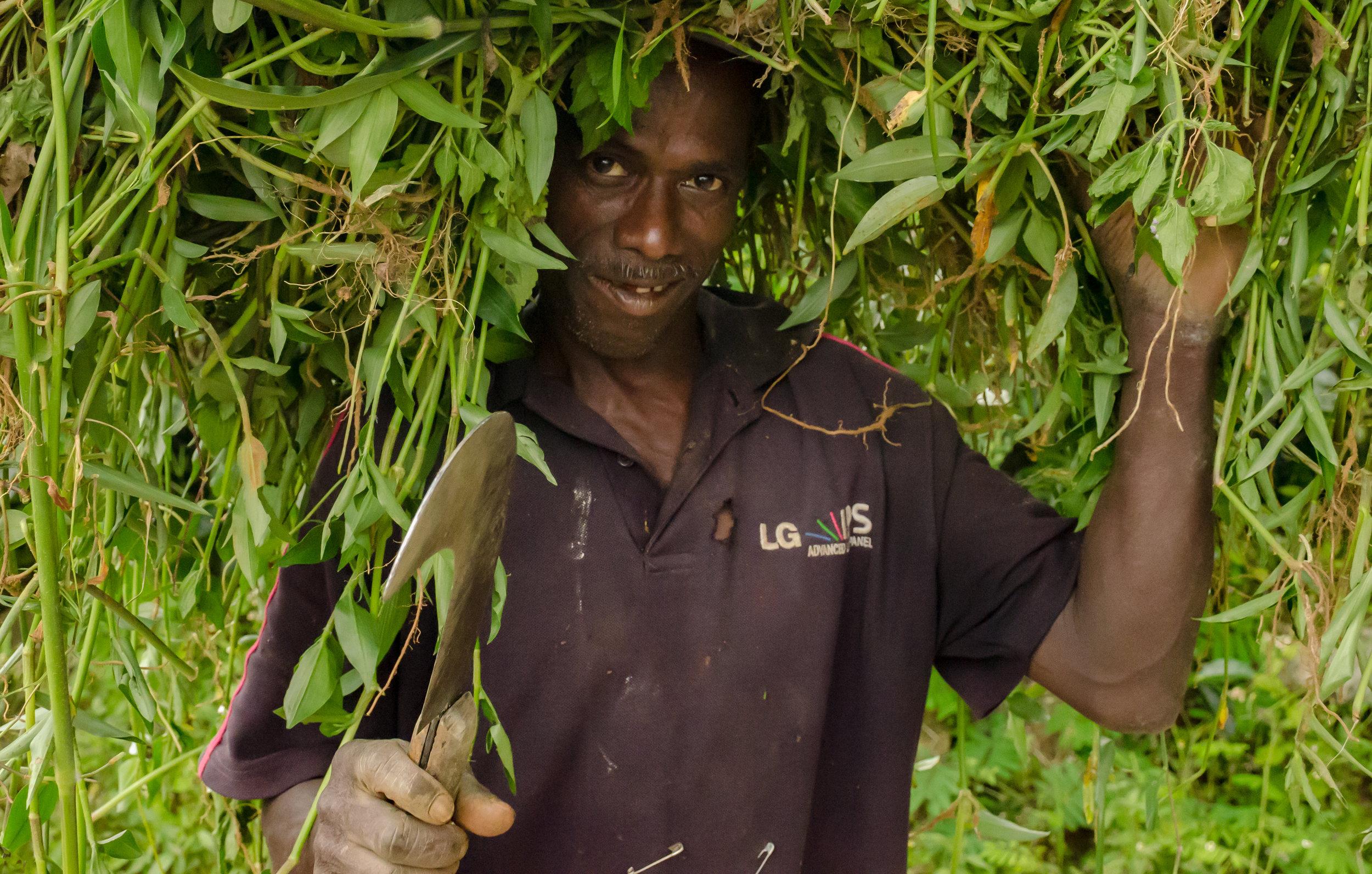 Tea Picker  , Nuwera Eliya District, Sri Lanka - 2019 © Mike Best