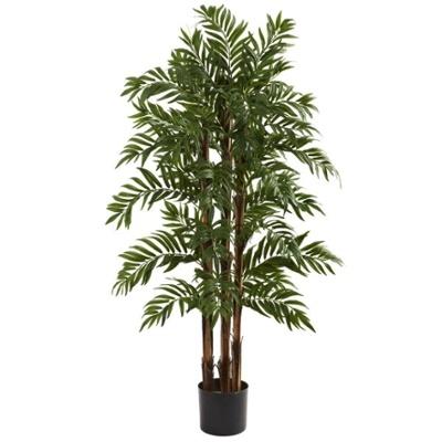 Parlor Palm.jpg