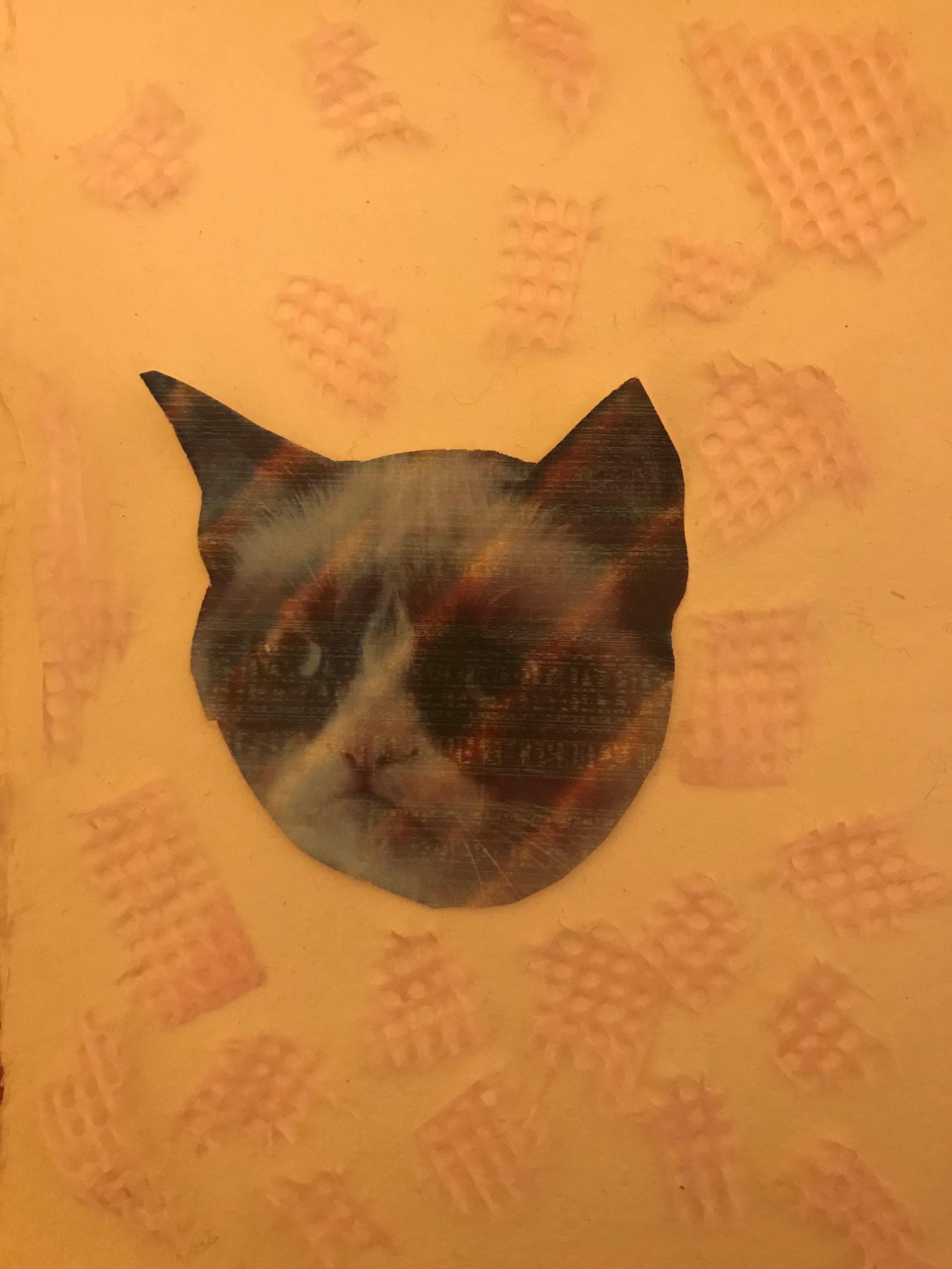 Day 334. Grumpy Cat Collage
