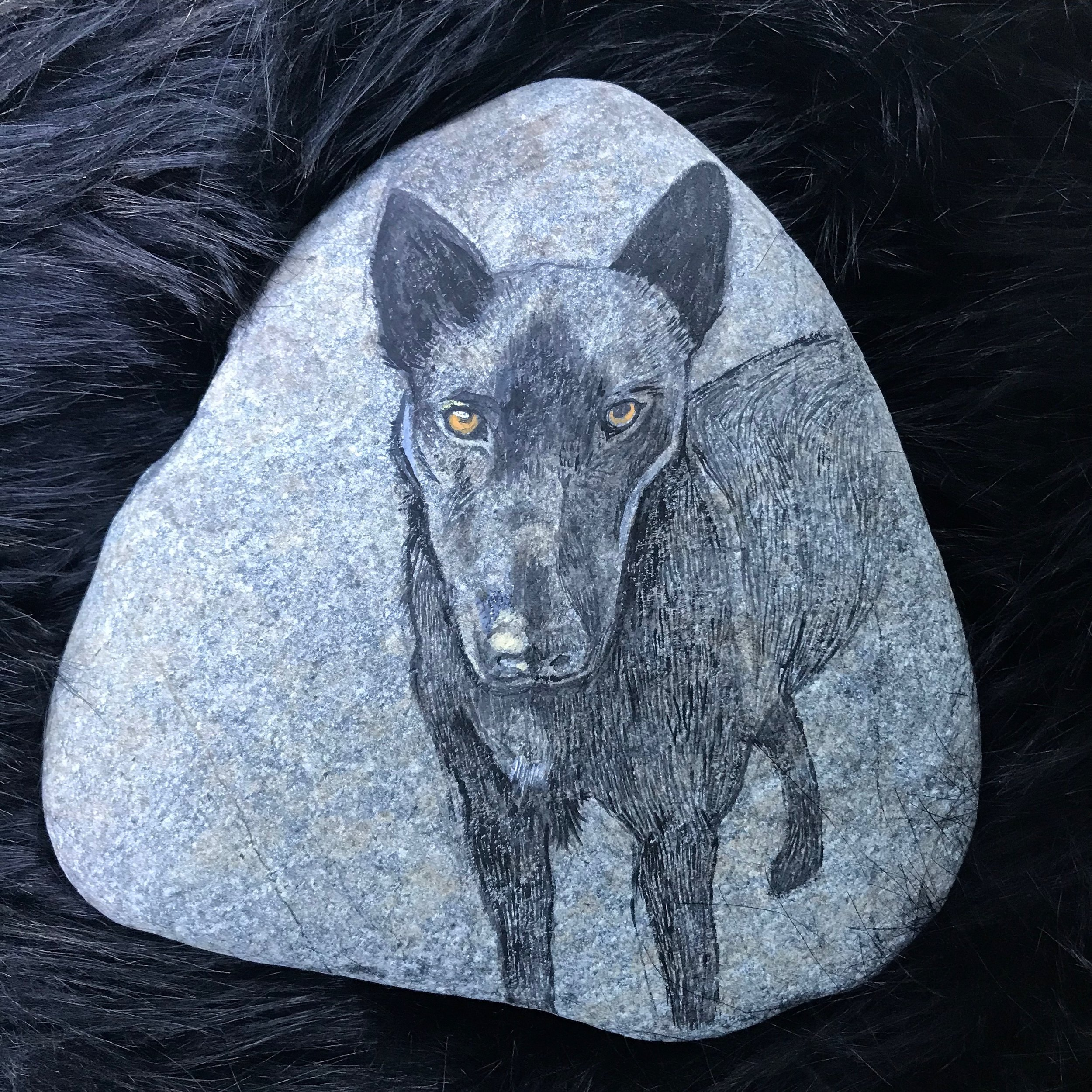 Day 362. Dog on a Rock