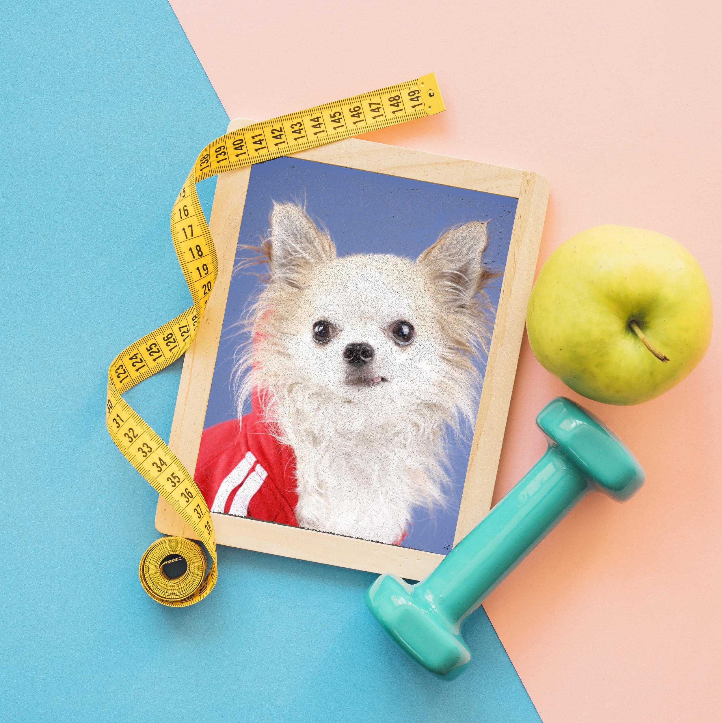 "CONOCE AL life coach Chihuahua® - ""Practical Wisdom for Curious Minds"" - contenido en inglés"