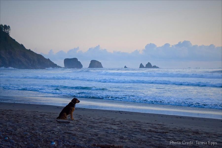 Waiting Dog_wphotocredit.jpg