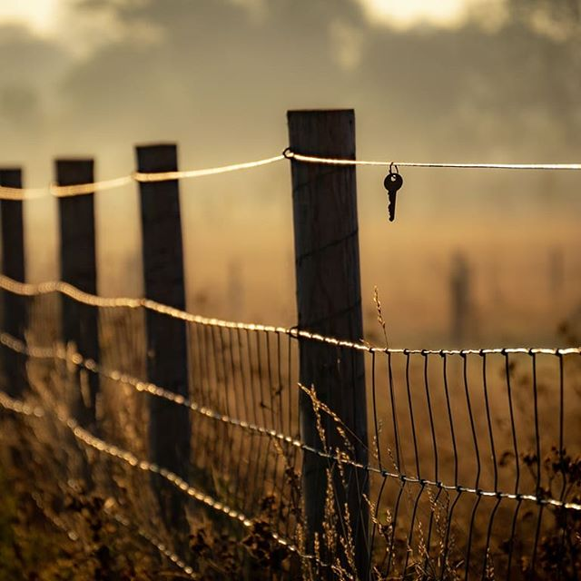 People say the key to success comes from within. However, as you can clearly see it's actually hanging off a fence in the middle of a field. Might actually do a limited run of prints of this one. Hit me up if you want one. . . . . . . . #illgrammers #moodygrams #morningmist #sunrise #hazefordays #agameoftones #shotz_fired #key #autumn #falltones #fall #trappingtones #greatdenham #bedford #potd #picoftheday #winteriscoming #igtones #instagood #instapic #depthobsessed #fatalframes #gramslayers #lumix #lumix14140 #visualambassadors #bokeh_shotz #nature #mystery #prints