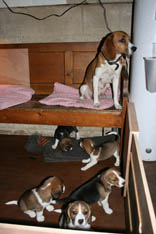 Puppies B.jpg