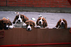 Puppies A.jpg