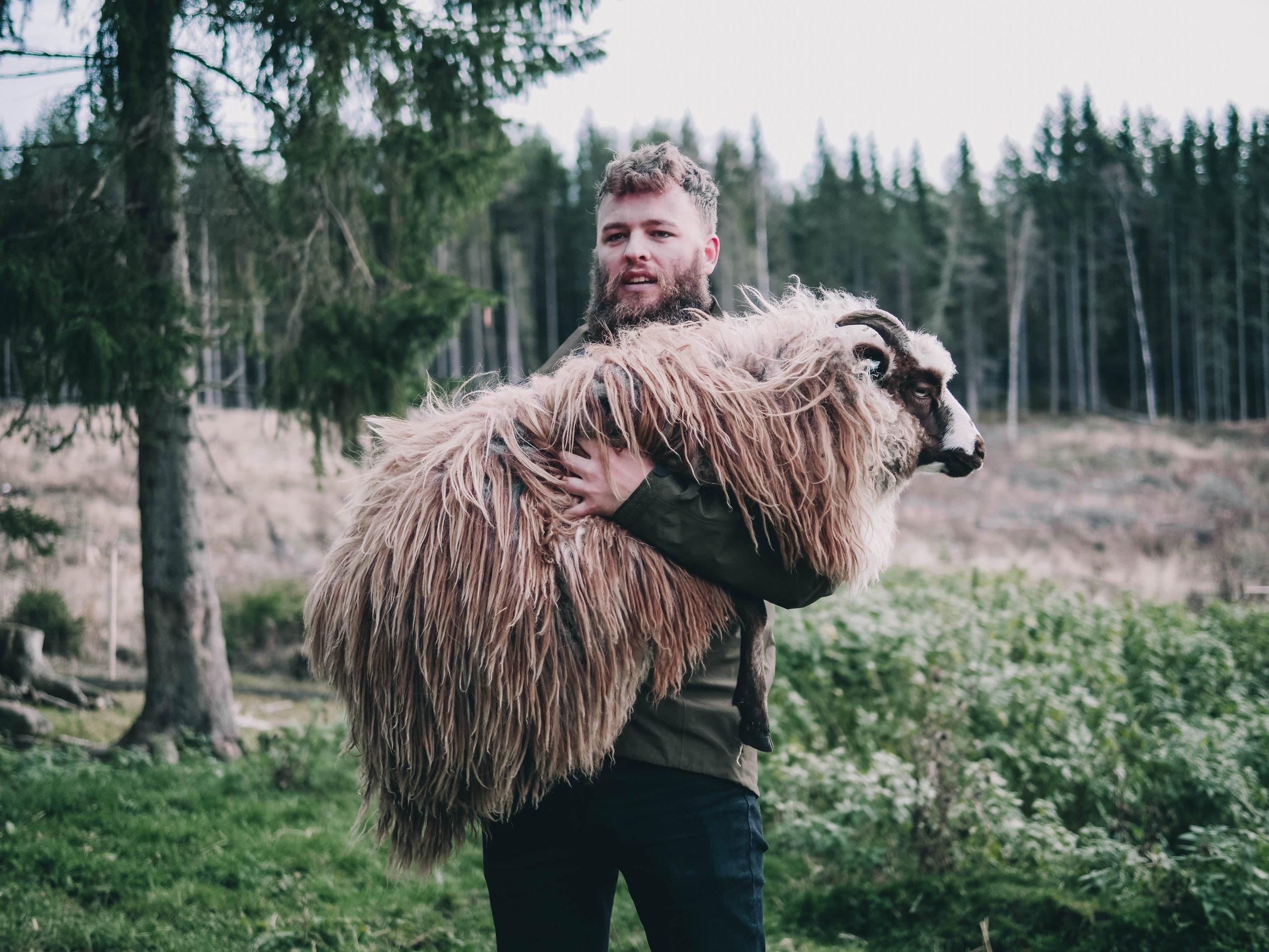 young shepherd.jpg
