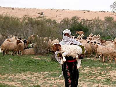 Shepherd+in+Israel.jpg