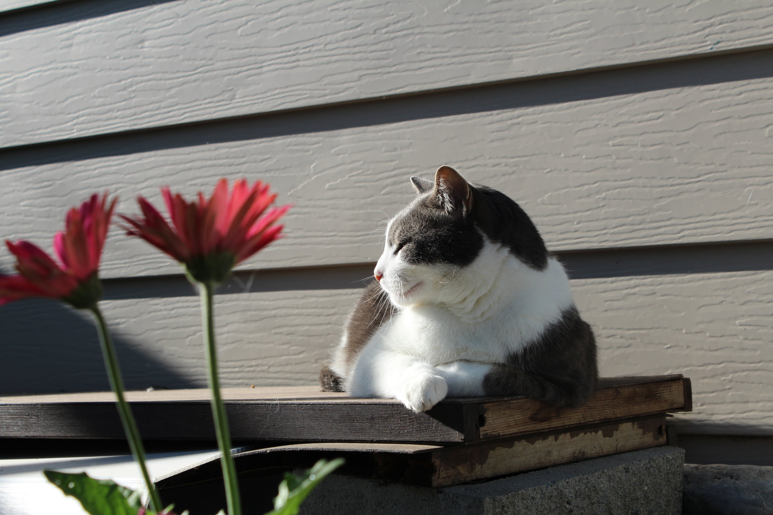 flowerpood.JPG
