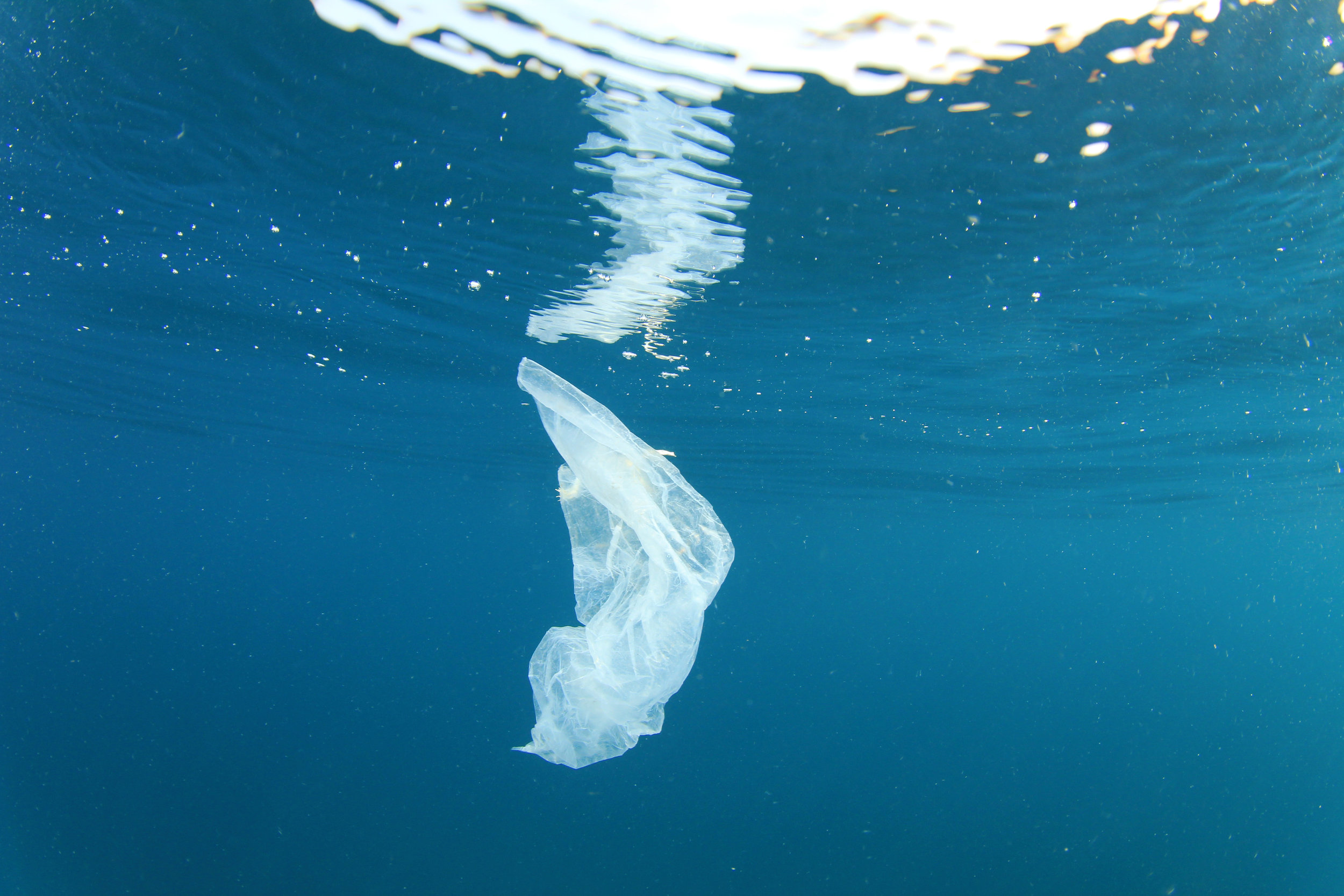 Why Recycled Plastics? - Every year, 8 million metric tons of plastic are dumped into our oceans. Recycling this plastic is expensive and technologically challenging so it is absolutely necessary for us to look for ways to make recycling economically feasible if we are to preserve our vital marine habitats.