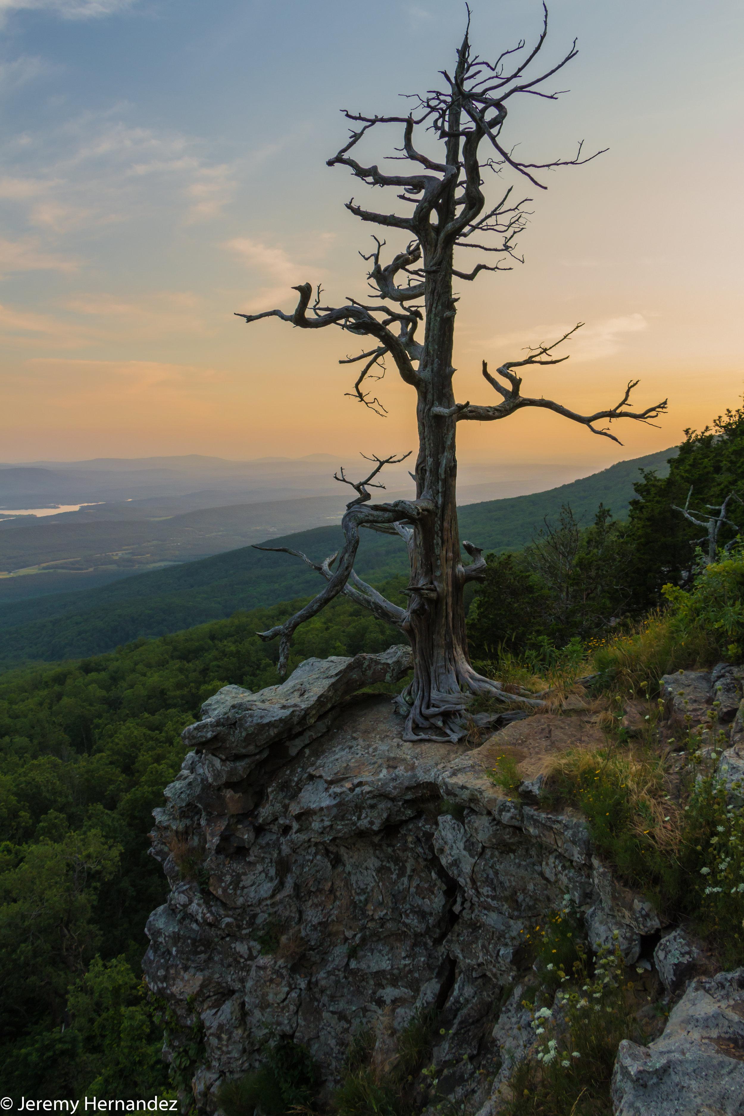 Tree on a cliff.jpg