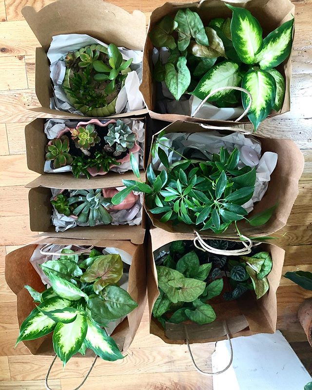 Busy 🐝🐝 as always we only used recycled packaging #plantbowls_brooklyn