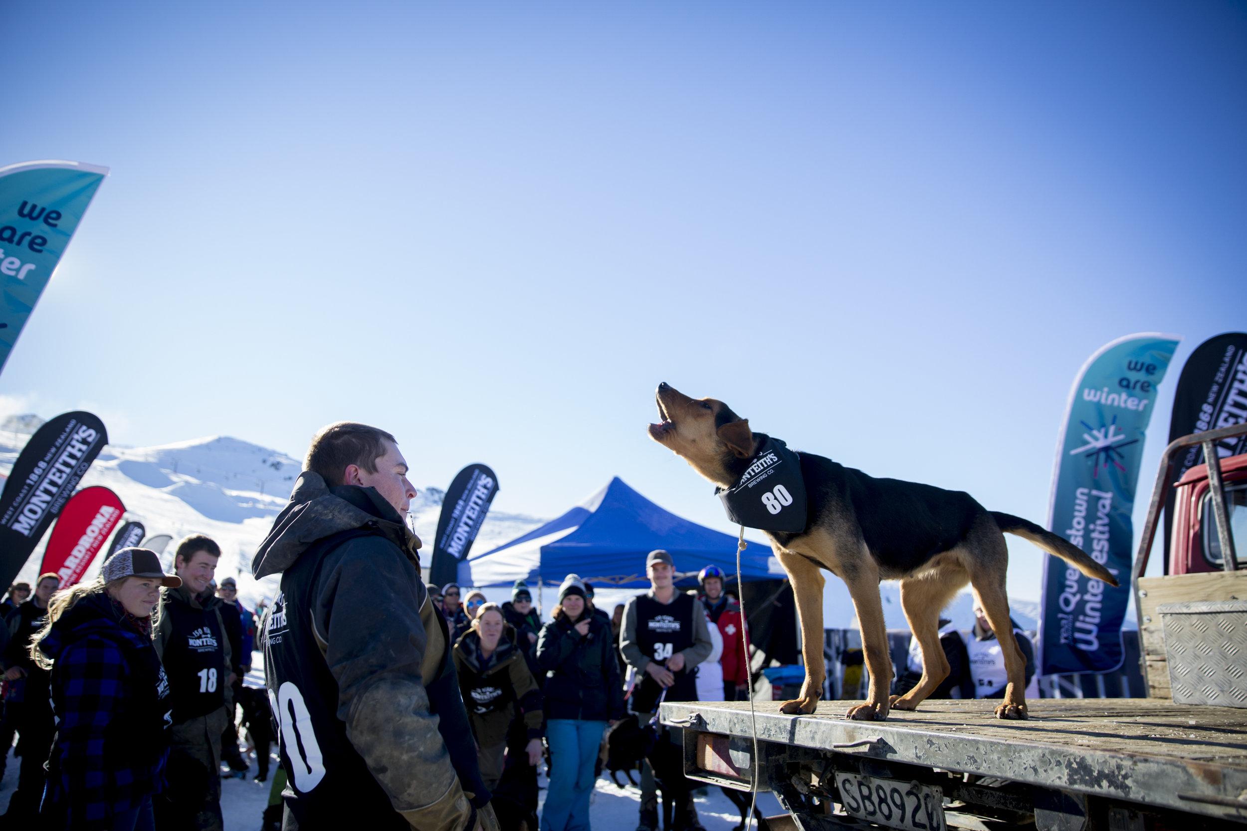 THE MONTEITH'S DOG BARKING & CARDRONA MOUNTAIN VILLAGE