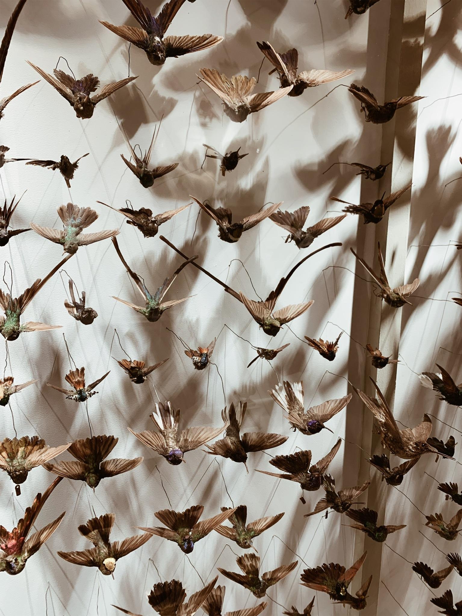Hummingbird wall <3