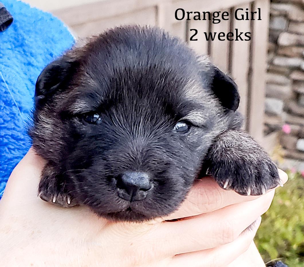 orange 2 weeks.jpg