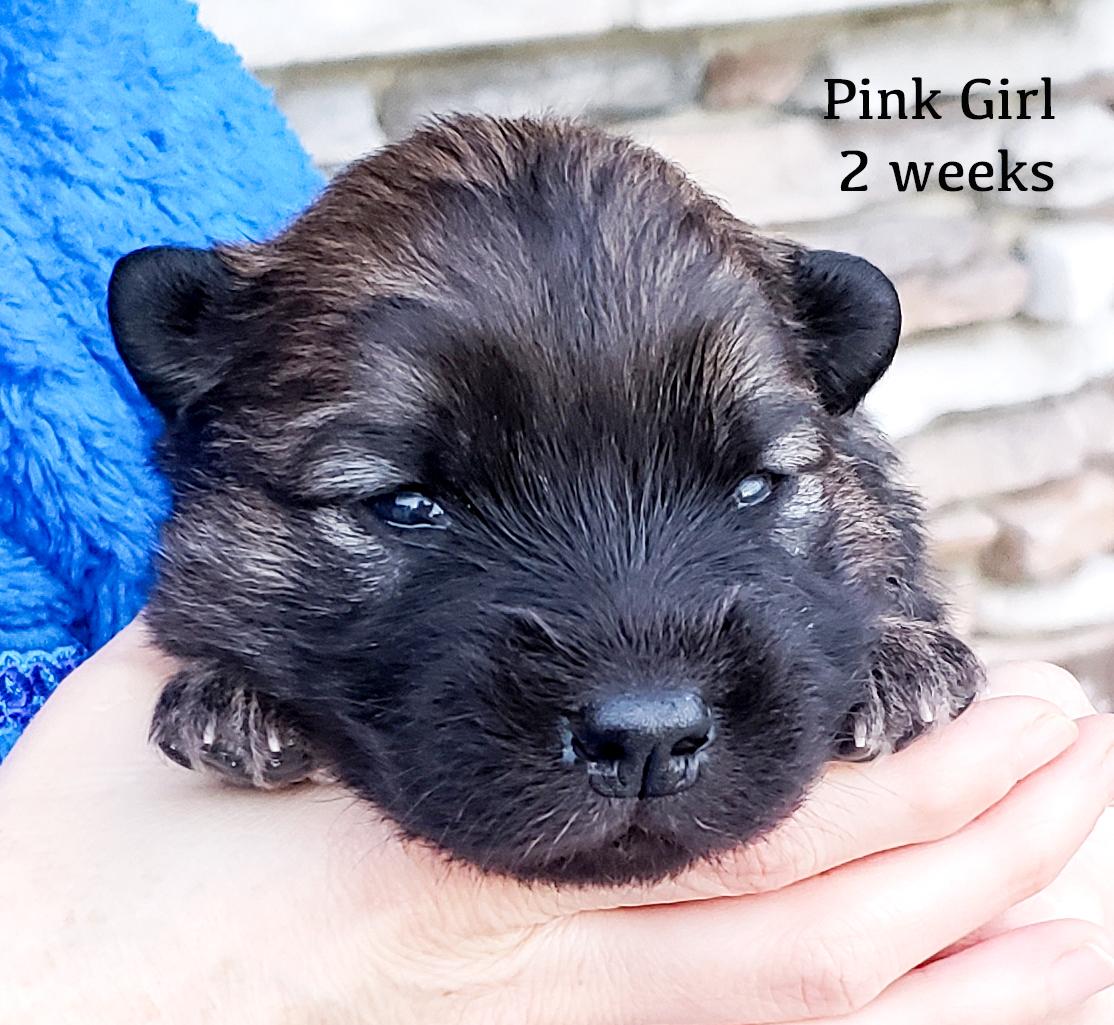 pink2 weeks.jpg