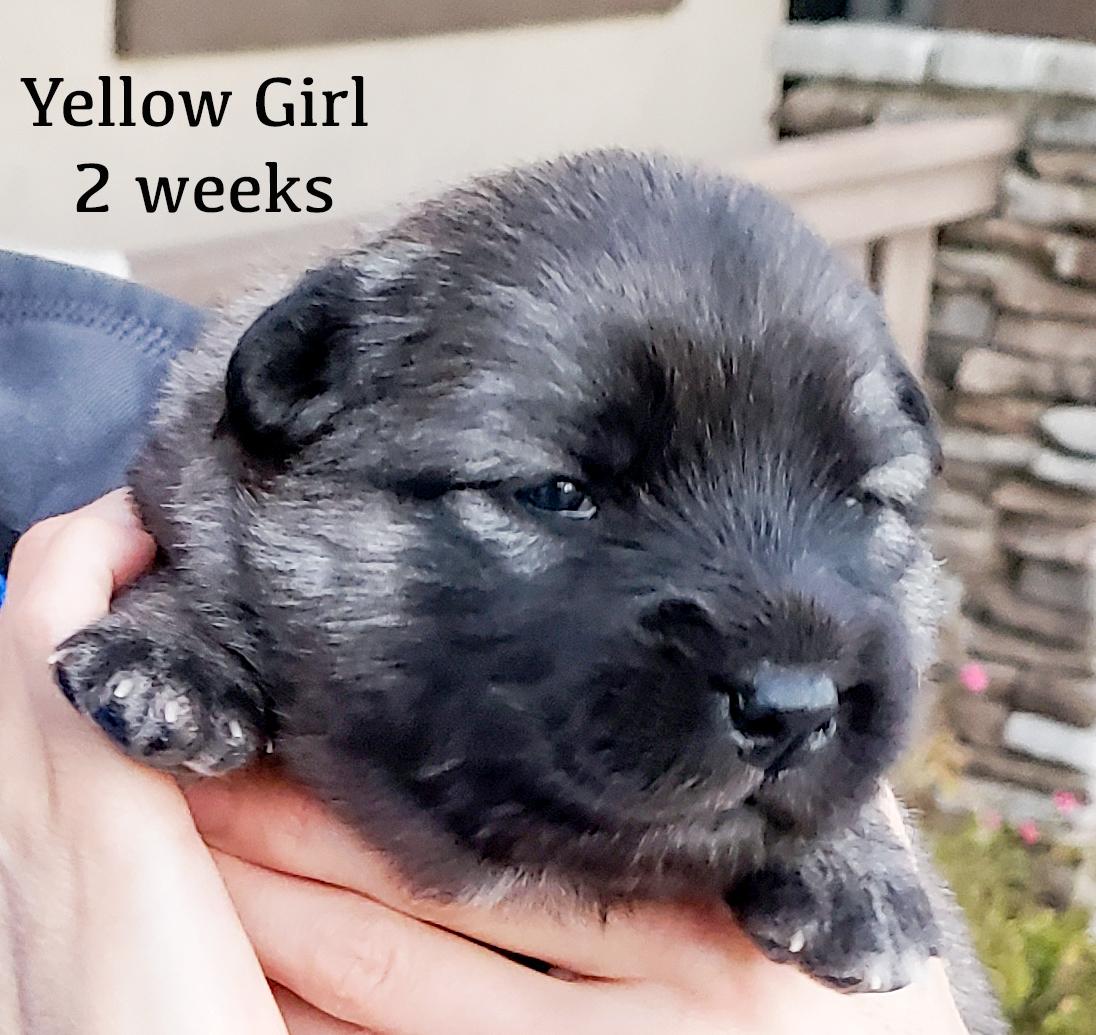 yellow 2 weeks.jpg