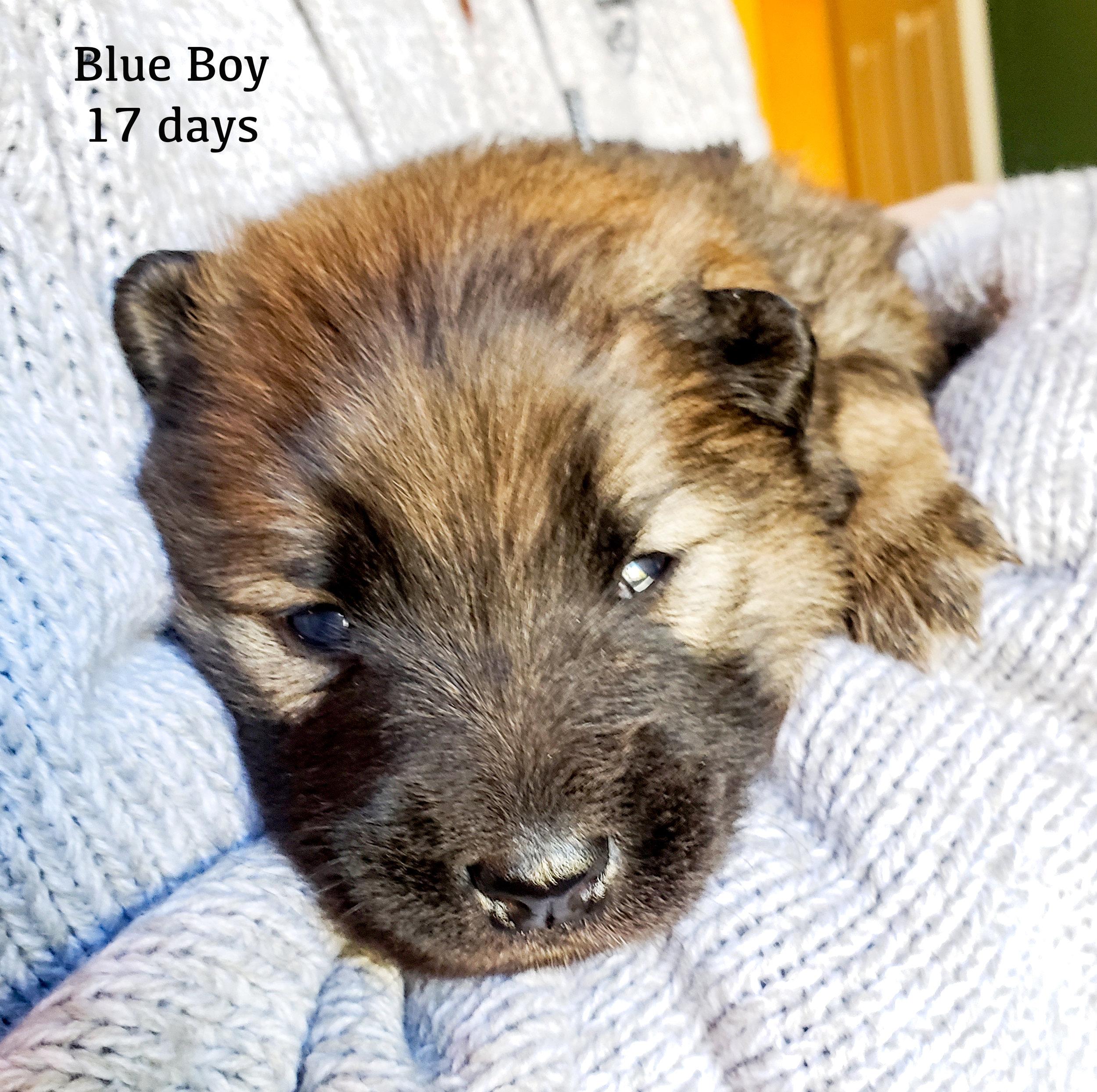 blue1 copya.jpg