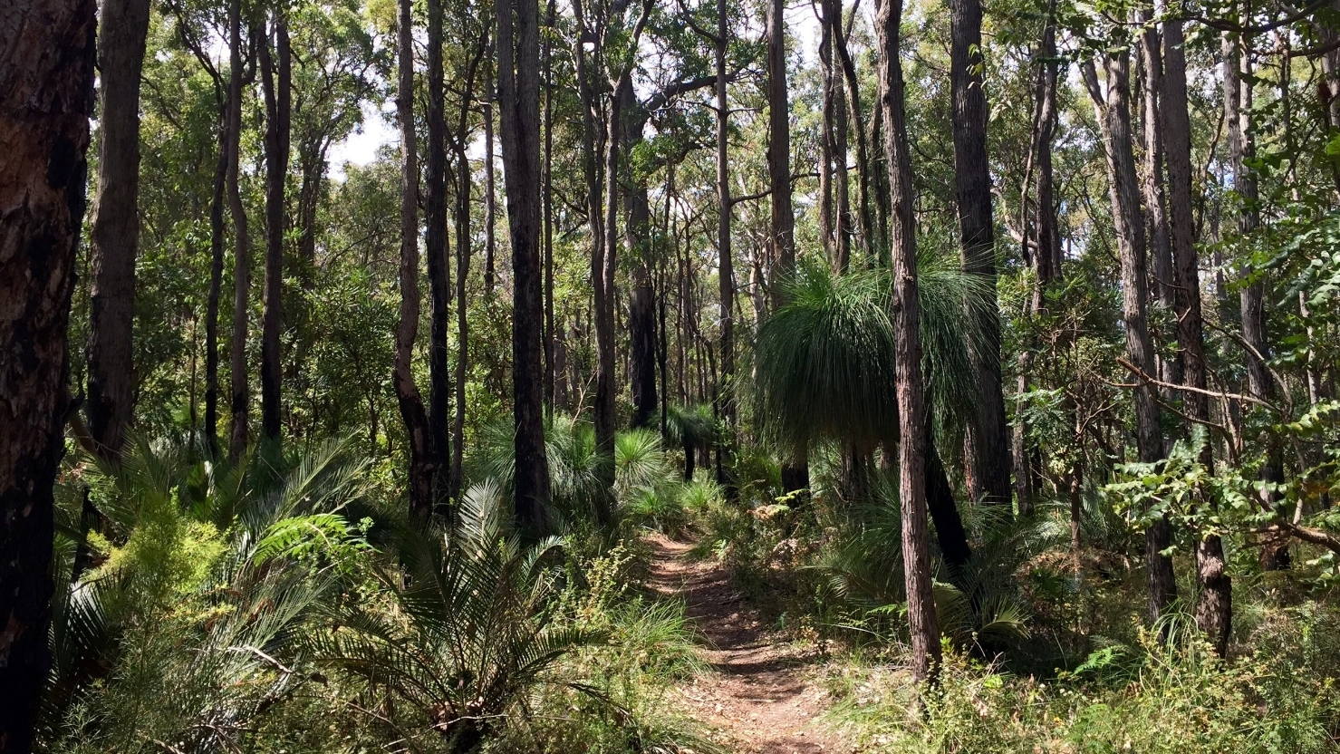 Forest bathing in Dwellingup