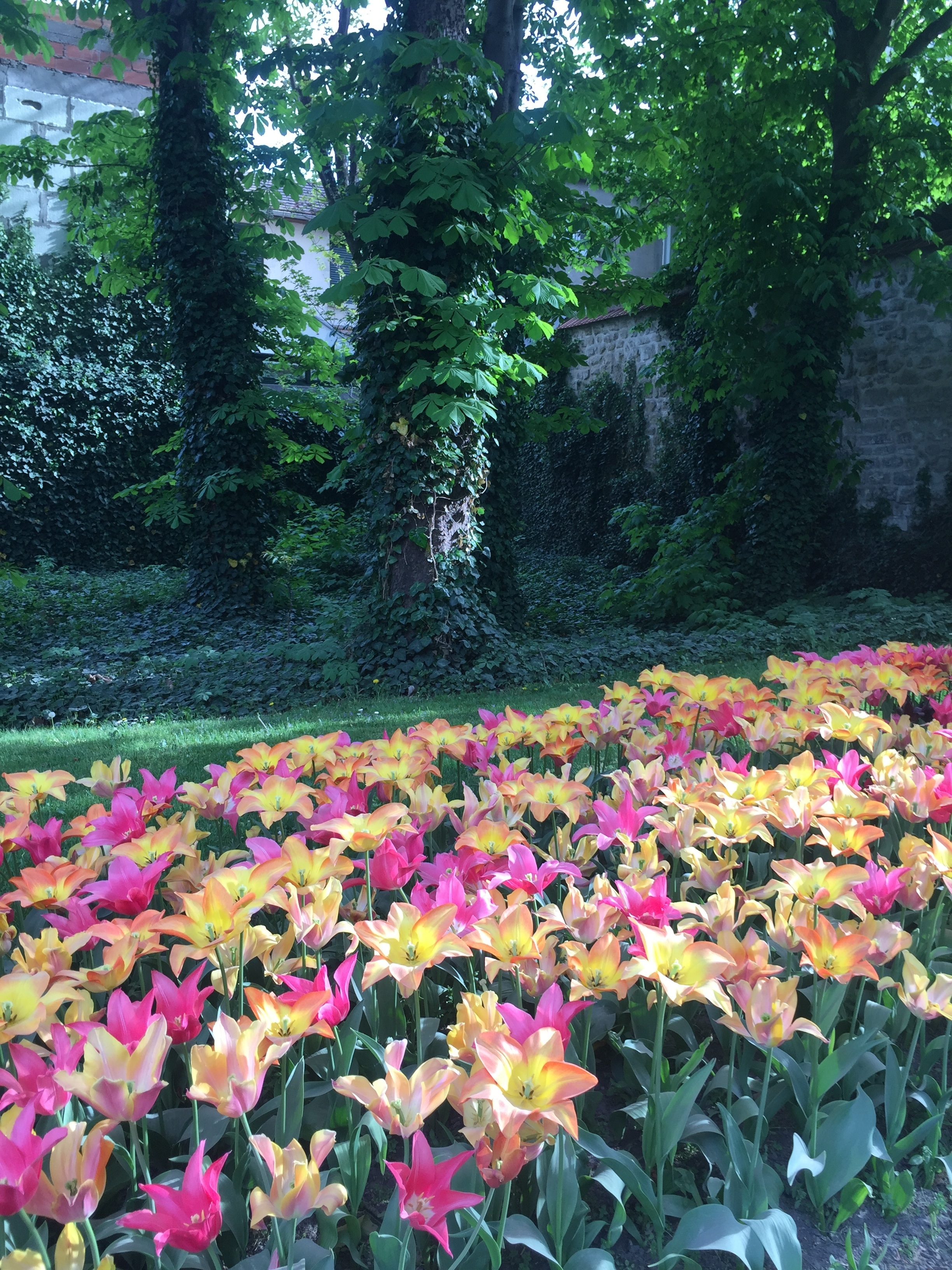 Tulip flower bed - what to do in Paris with kids