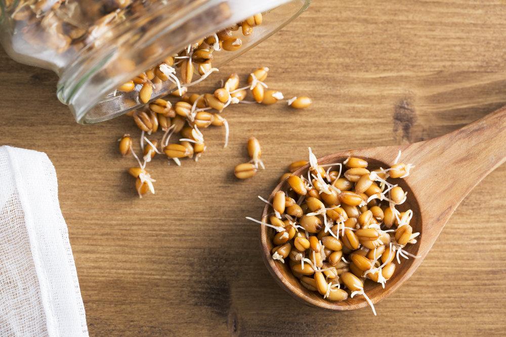 sproutedwheat.jpg