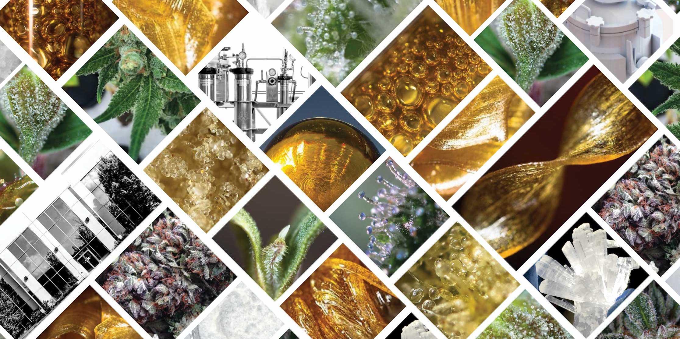THC extraction,  CBD extraction,  rosin extraction,  kief extraction,