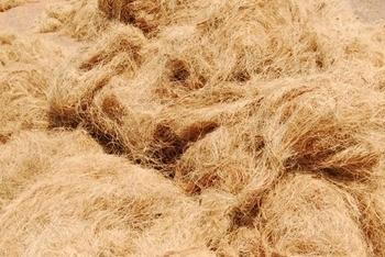 coconut-fibre-1.jpg