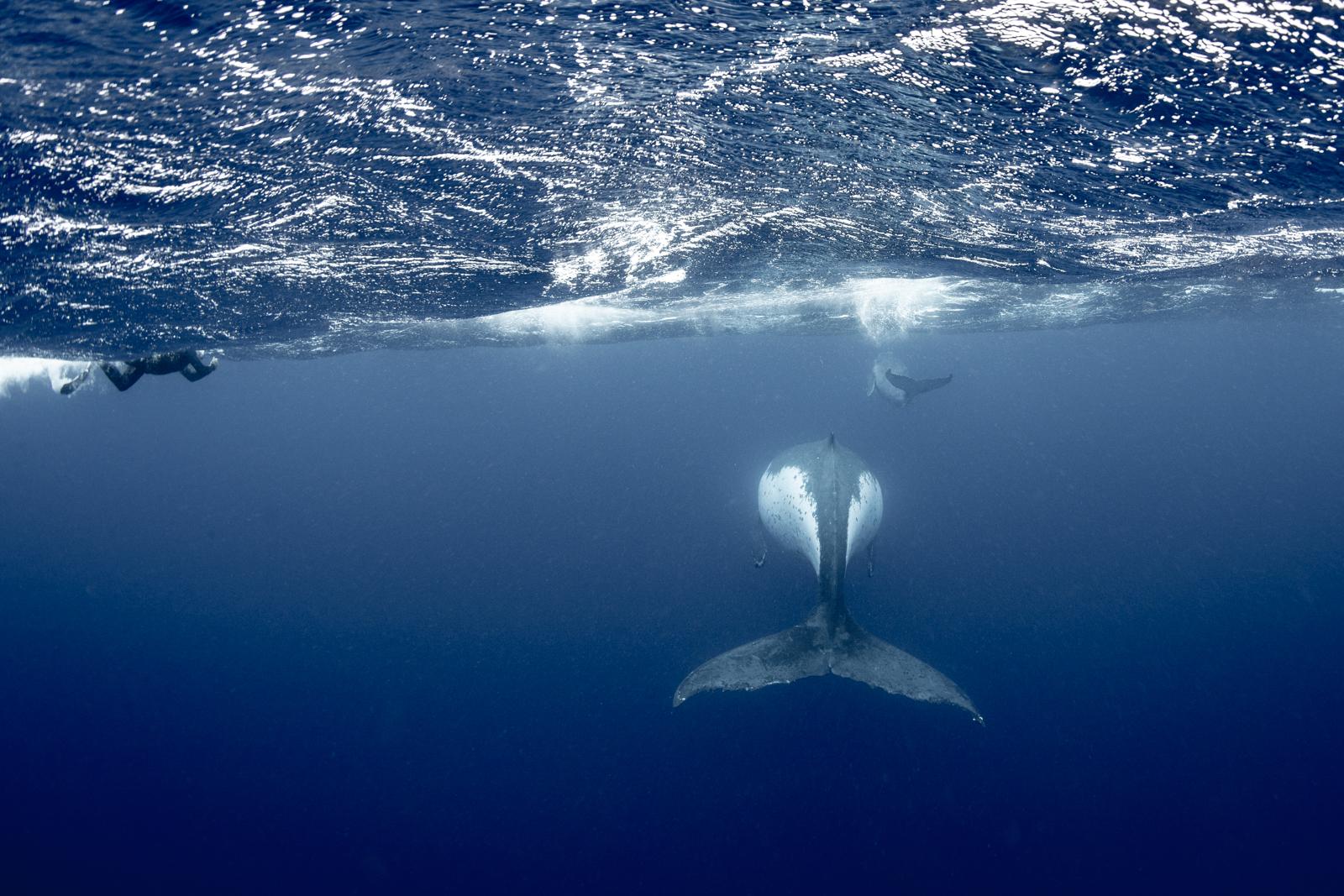 Annie Crawley Our Ocean And You Dive Team-3232.jpg