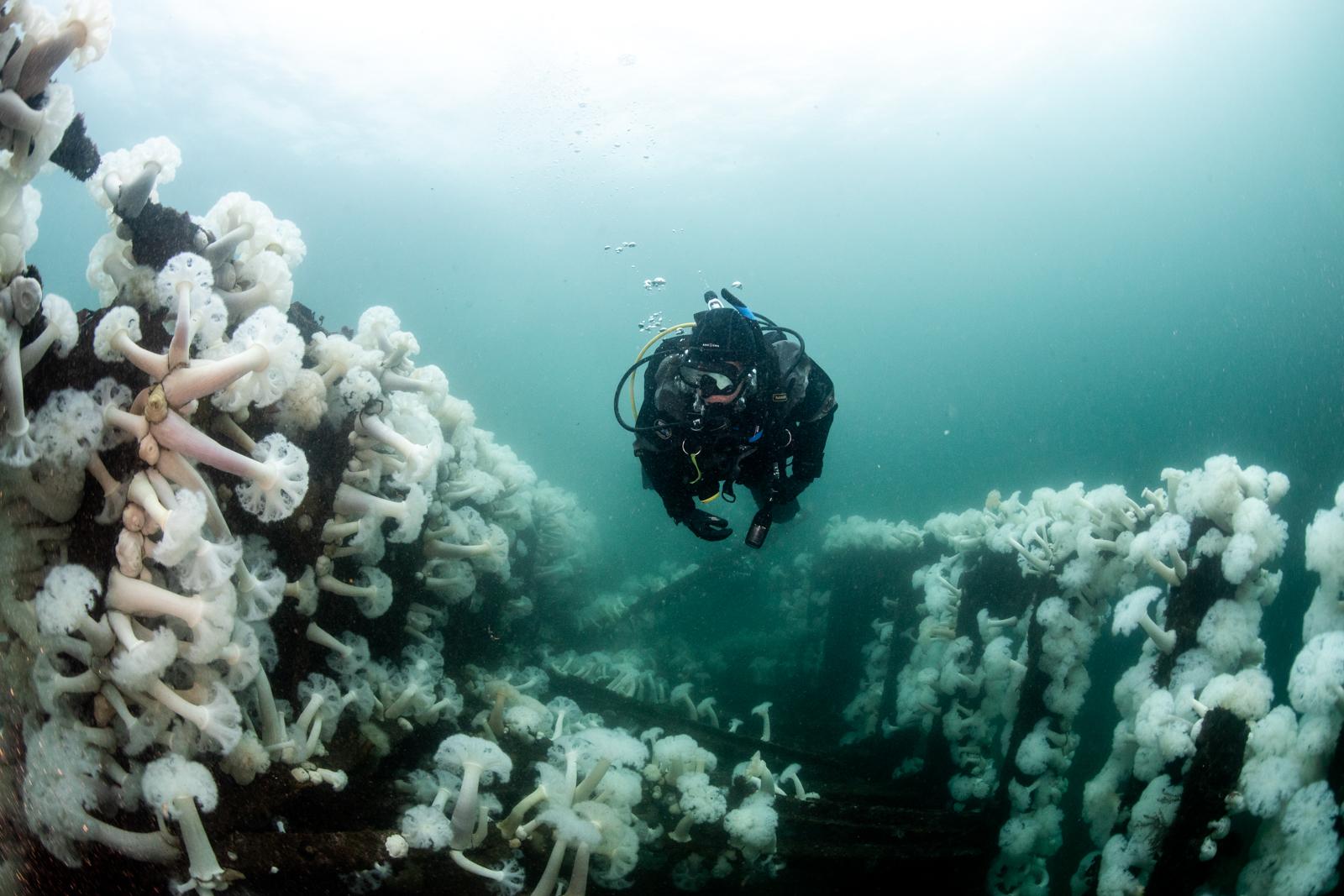 Annie Crawley Our Ocean And You Dive Team-5037.jpg
