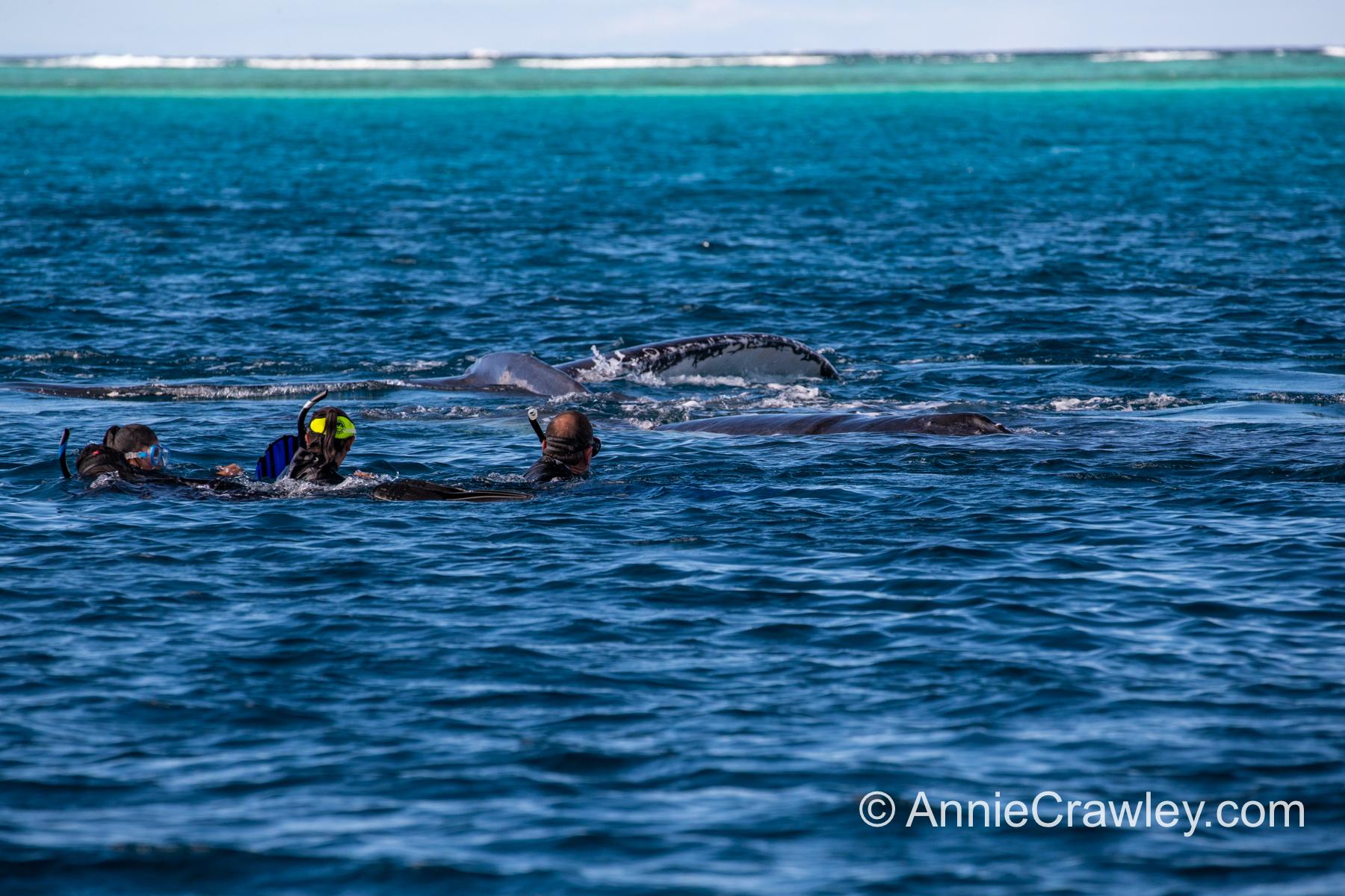 Tonga Humpback Whales Annie Crawley-0561.jpg