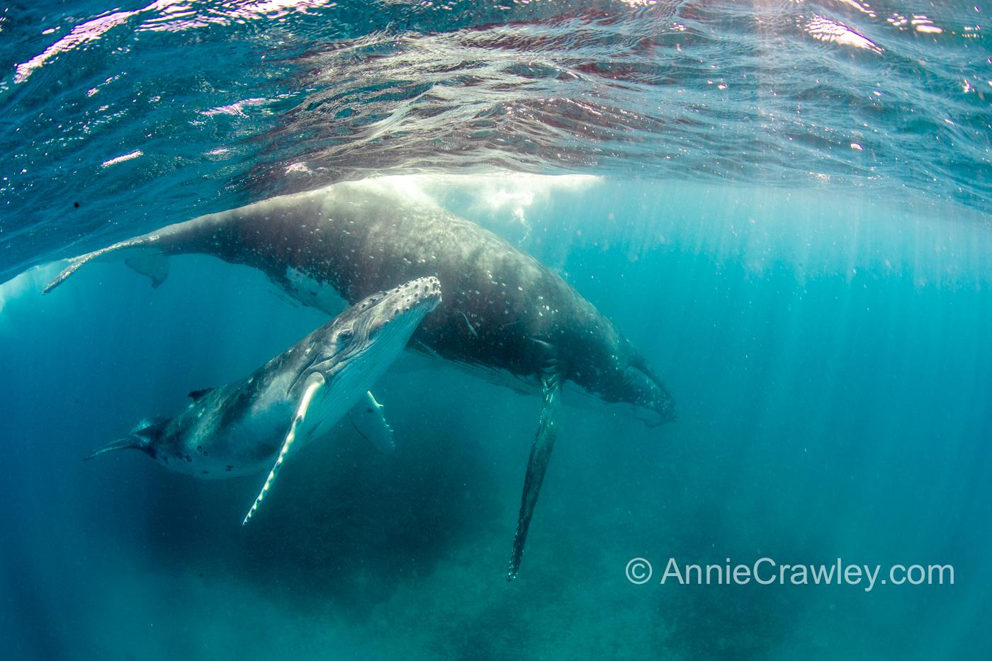 Tonga Annie Crawley Dive Team 2018-2086.jpg