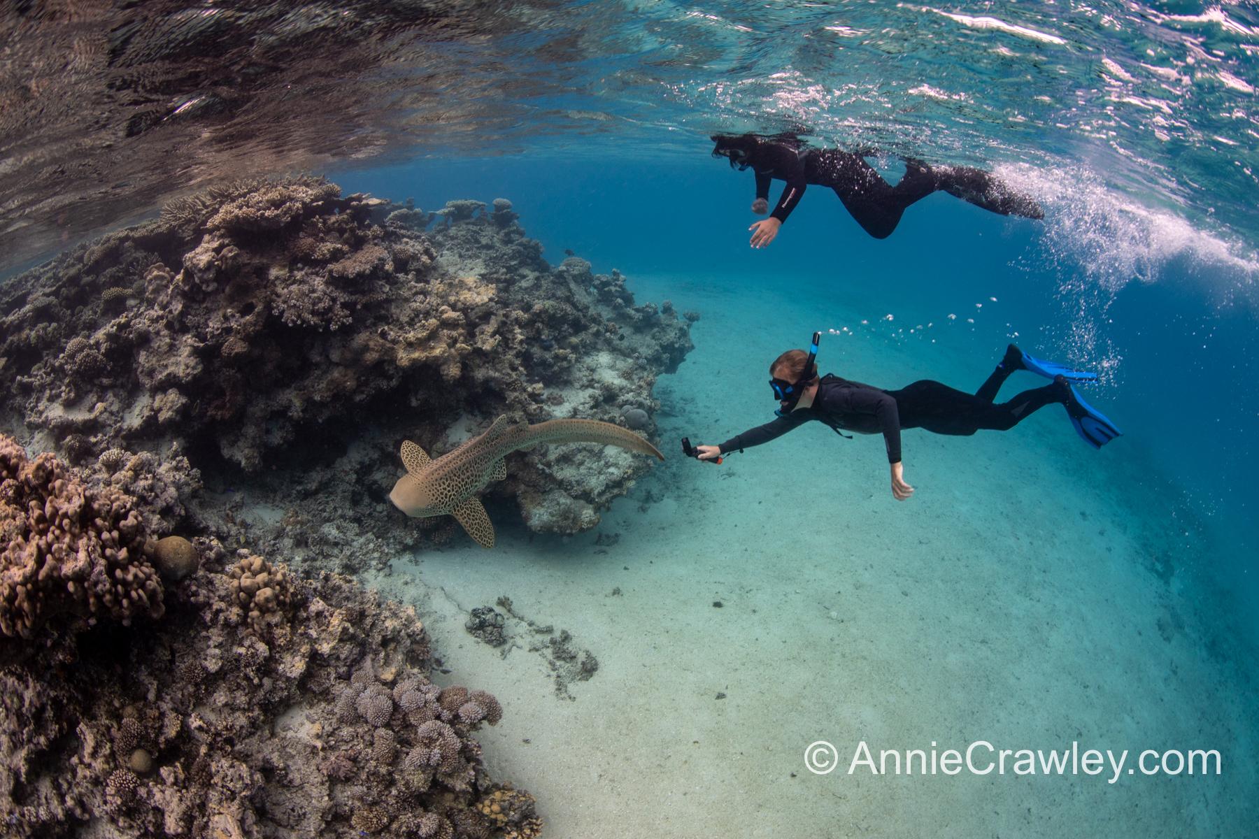 Tonga Humpback Whales Annie Crawley-9853.jpg