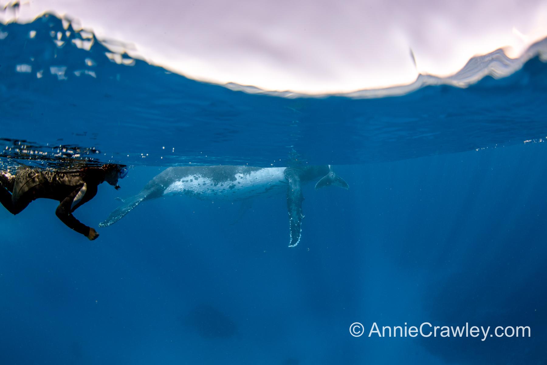 Tonga Humpback Whales Annie Crawley-0128.jpg