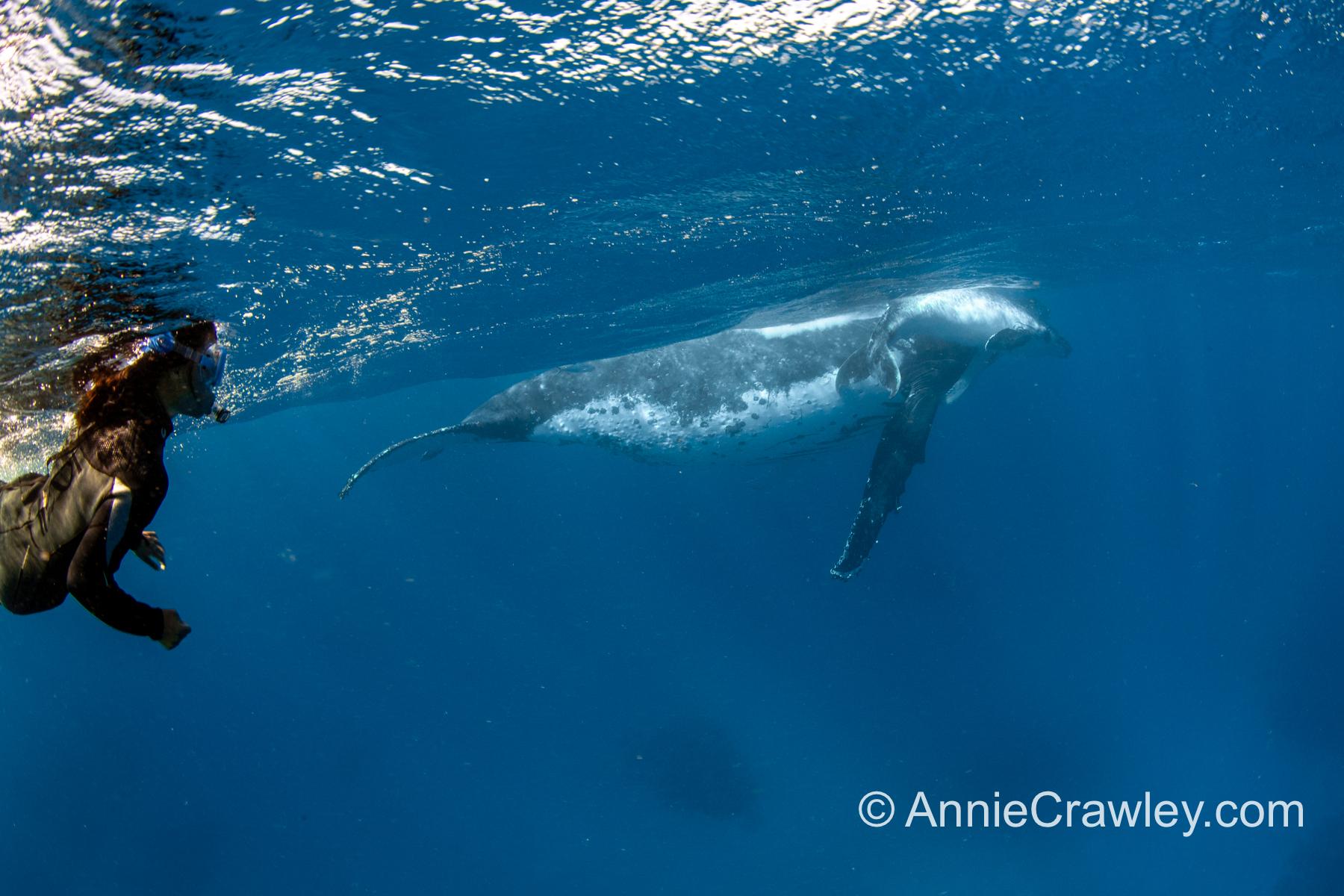 Tonga Humpback Whales Annie Crawley-0143.jpg