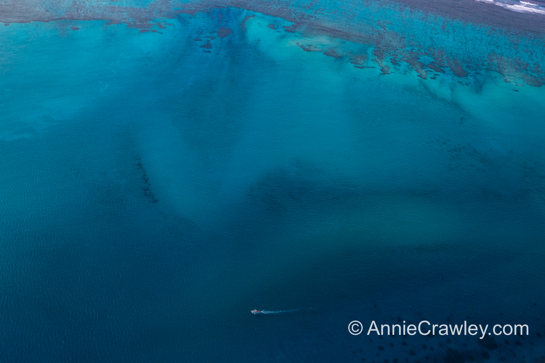 Tonga Humpback Whales Annie Crawley-9644.jpg