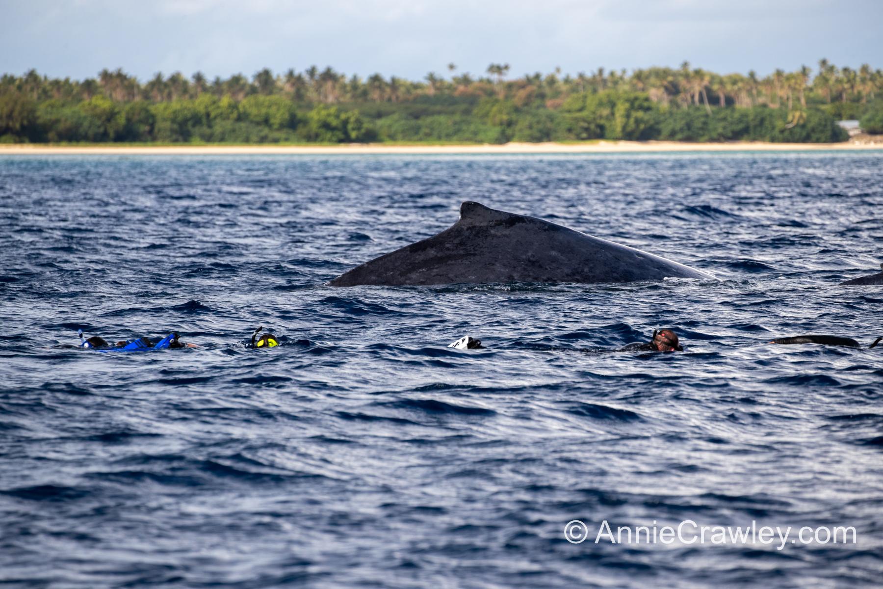 Tonga Humpback Whales Annie Crawley-9952.jpg