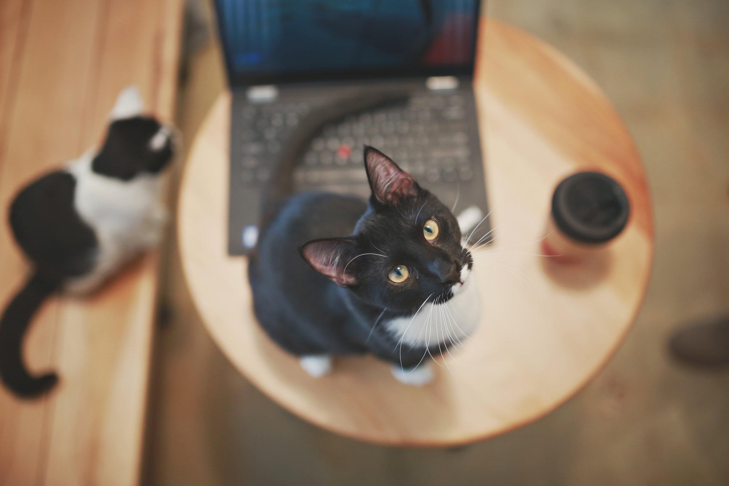 Cafe_81.jpg