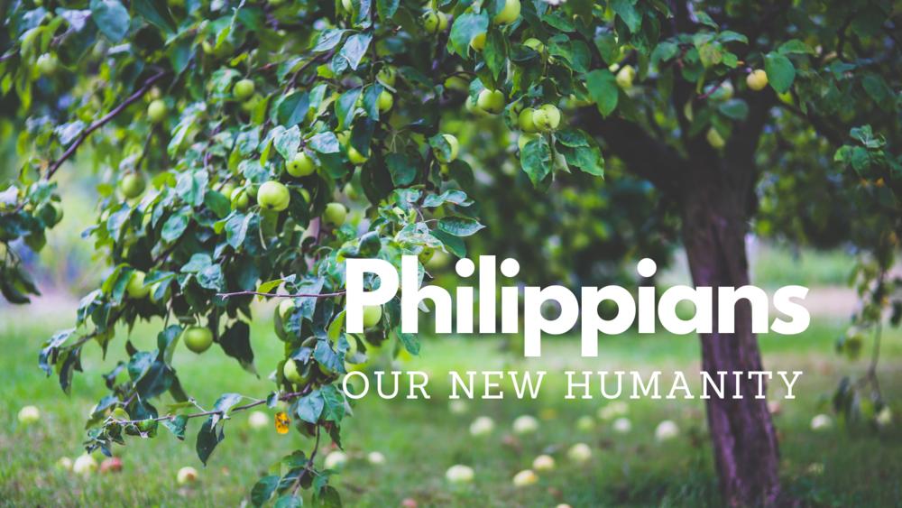 Philippians cover art.png