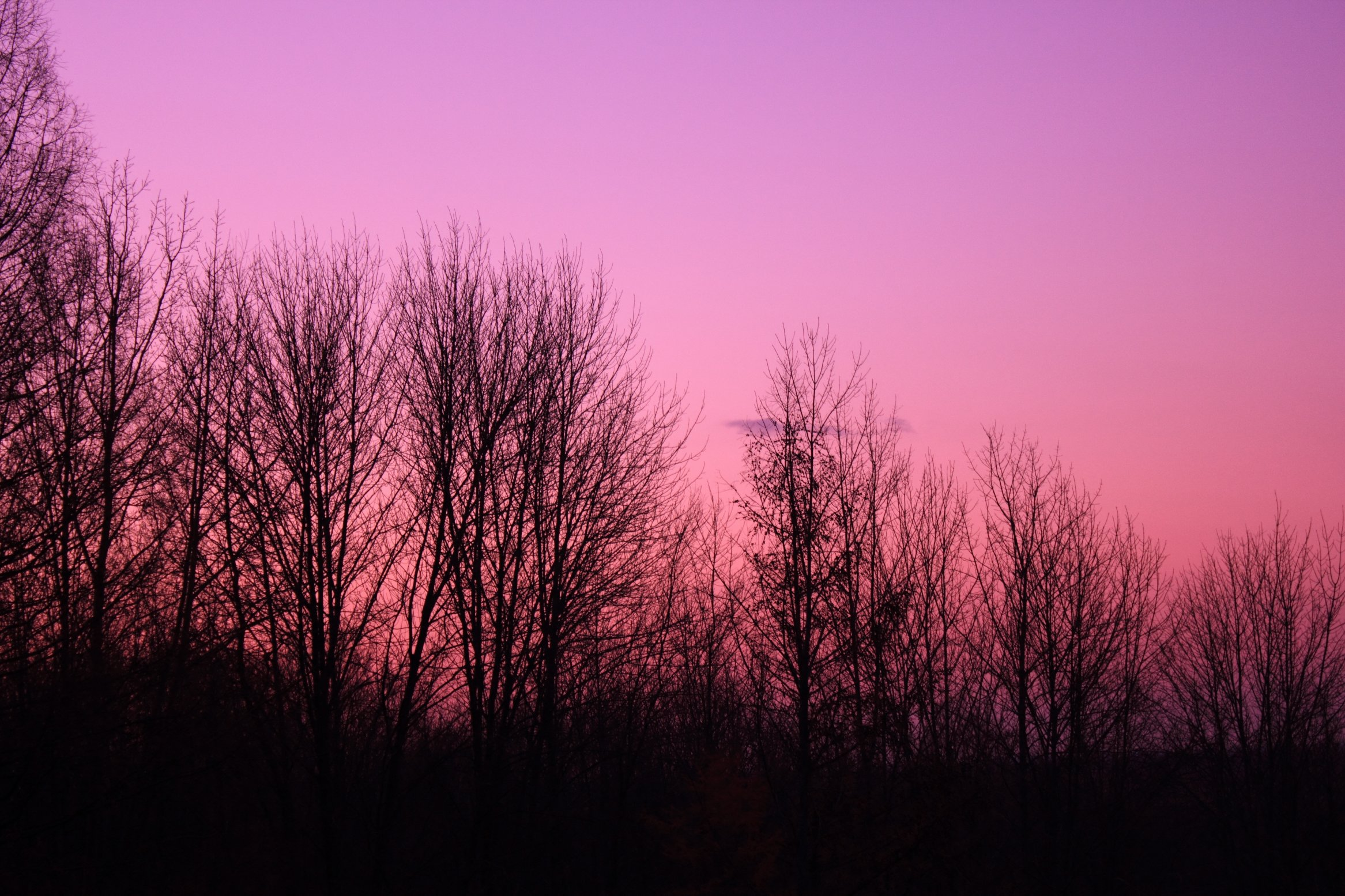 wisconsin-pike-lake-state-park-purple-sky-over-trees.jpg