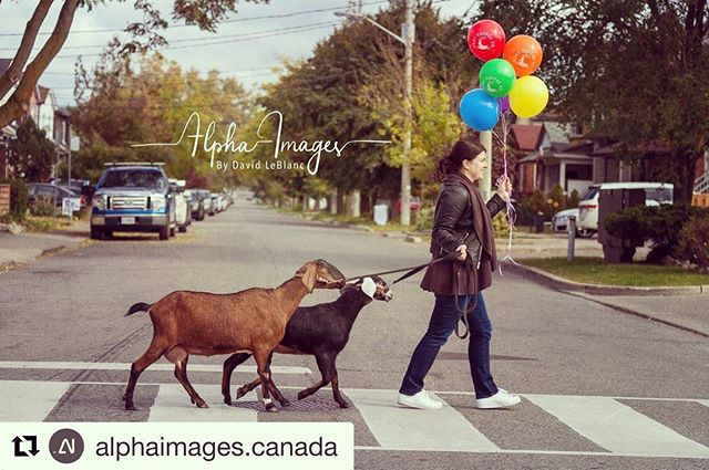 The Goats are coming!!! 🐐🐐 . We're just 10 days away from our 5th anniversary party! Can't wait for our petting zoo 🎈 #giveagoat . Thanks for the great 📷 @alphaimages.canada . . . #grazeatthegoat #toronto #the6ix #papevillage #danforth #eastyork #playter #iloveeastyork #fun #family #pettingzoo #espresso #food #eat #foodie #torontolife #cafe #coffee #goatcoffeeco #charity #livestock #plancanada #giftthatkeepsongiving