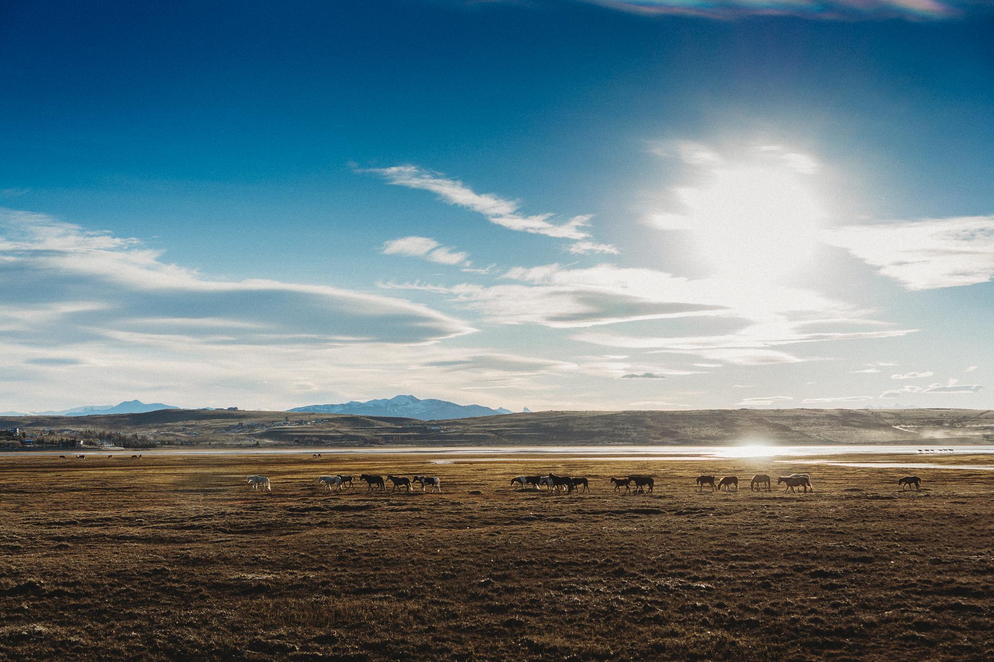 El Calafate, El Chalten, Perito Moreno, Parque Nacional Los Glaciares, Argentina, Buenos Aires-45.jpg