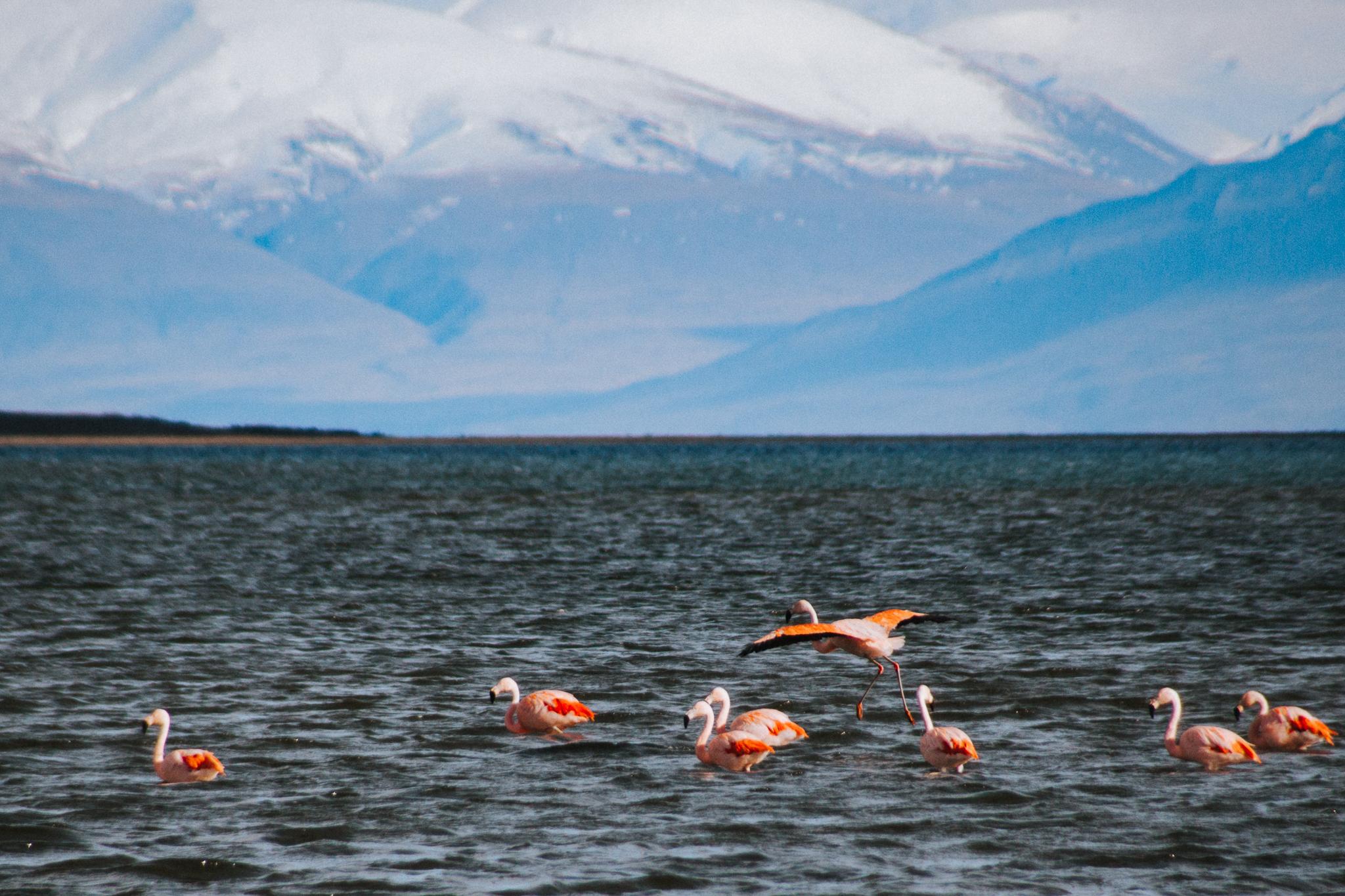 El Calafate, El Chalten, Perito Moreno, Parque Nacional Los Glaciares, Argentina, Buenos Aires-46.jpg