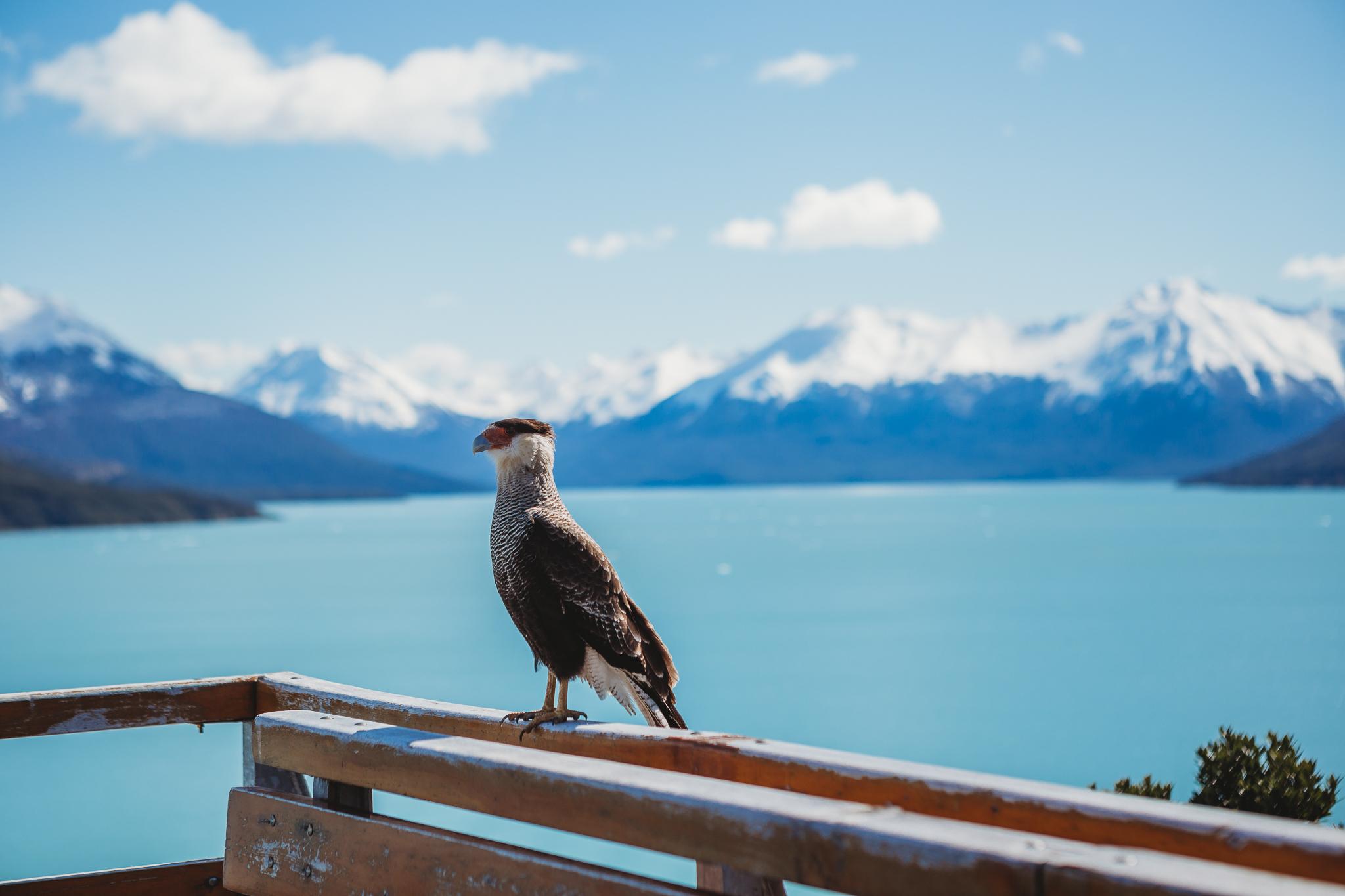 El Calafate, El Chalten, Perito Moreno, Parque Nacional Los Glaciares, Argentina, Buenos Aires-17.jpg
