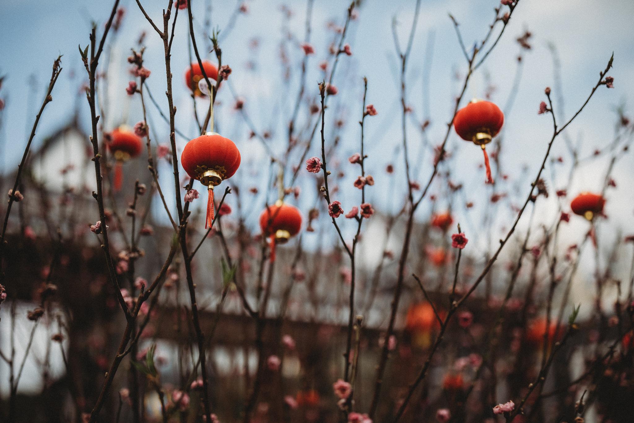 Haixinsha Flower festival, Chinese New Year, Guangzhou China (20 of 20).jpg